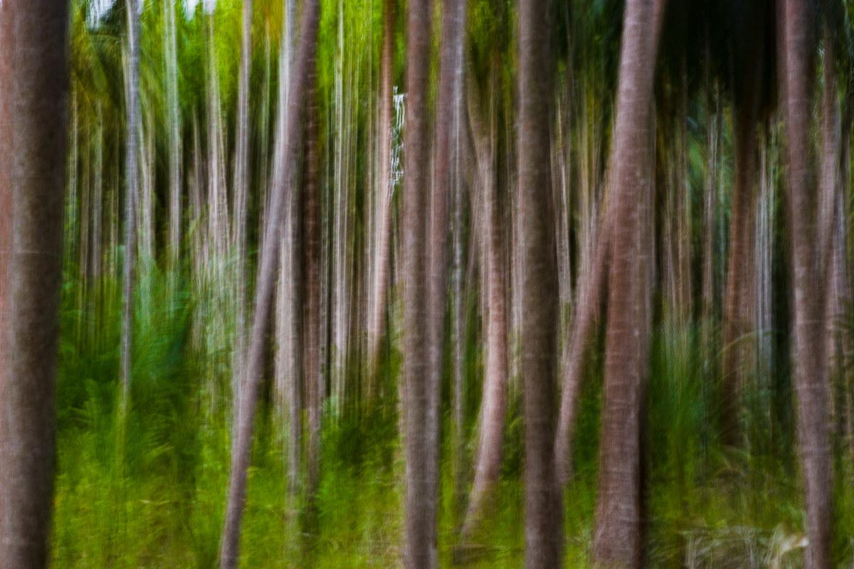 Pennellate nel bosco....