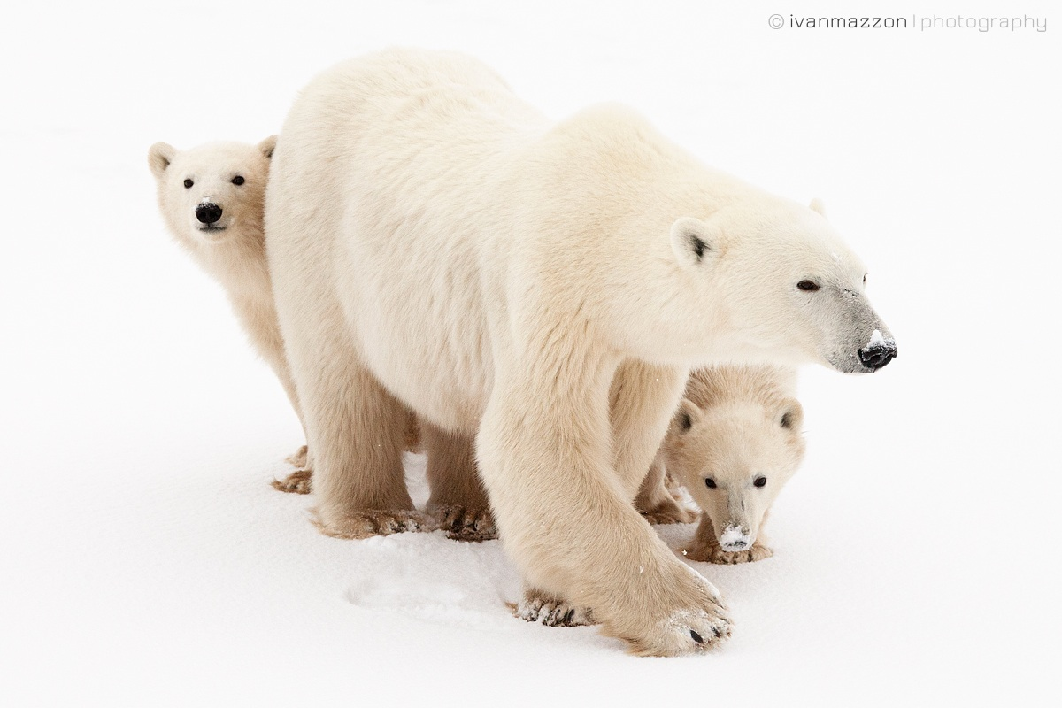 Mother and cubs...