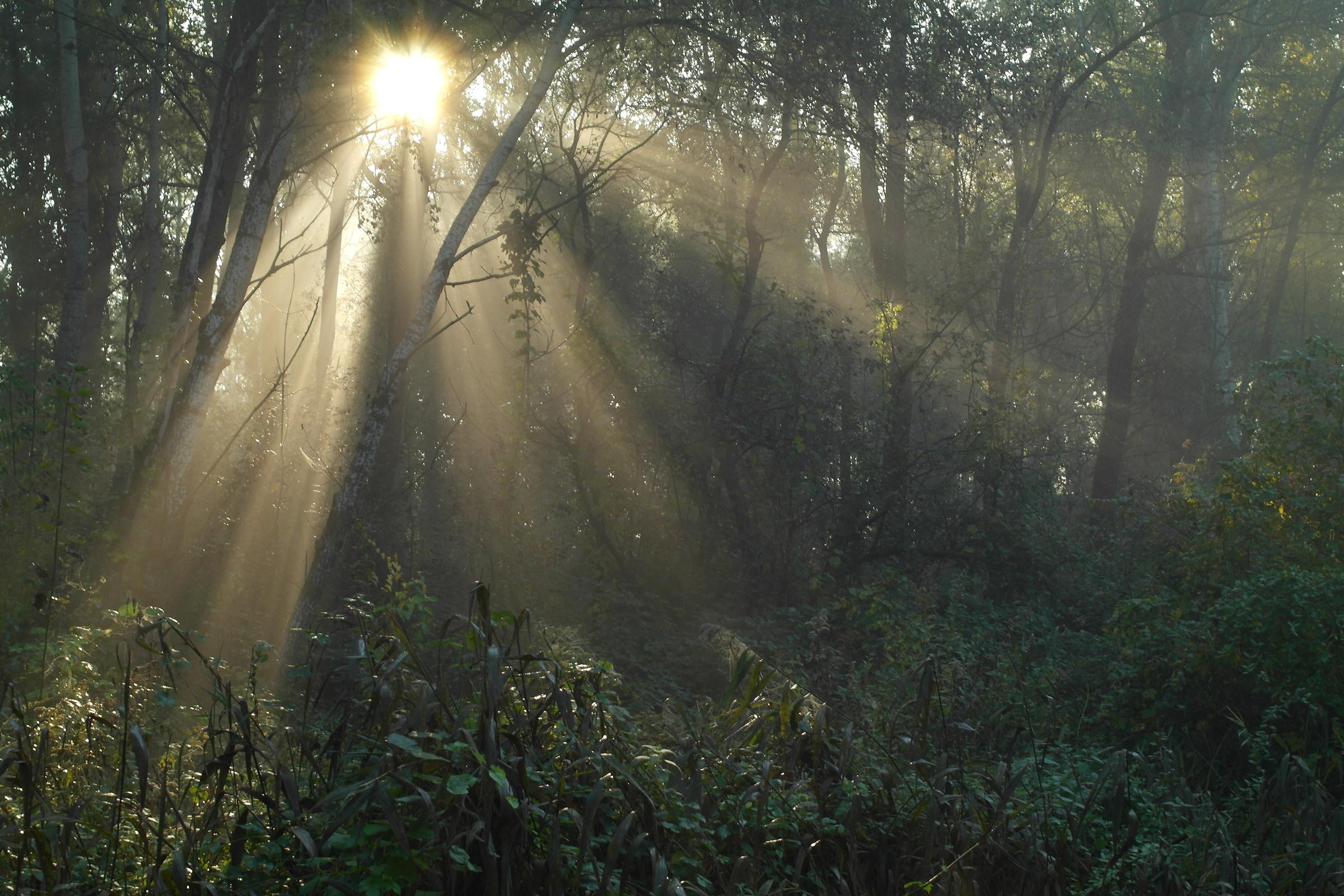 Sunbeams in the woods...