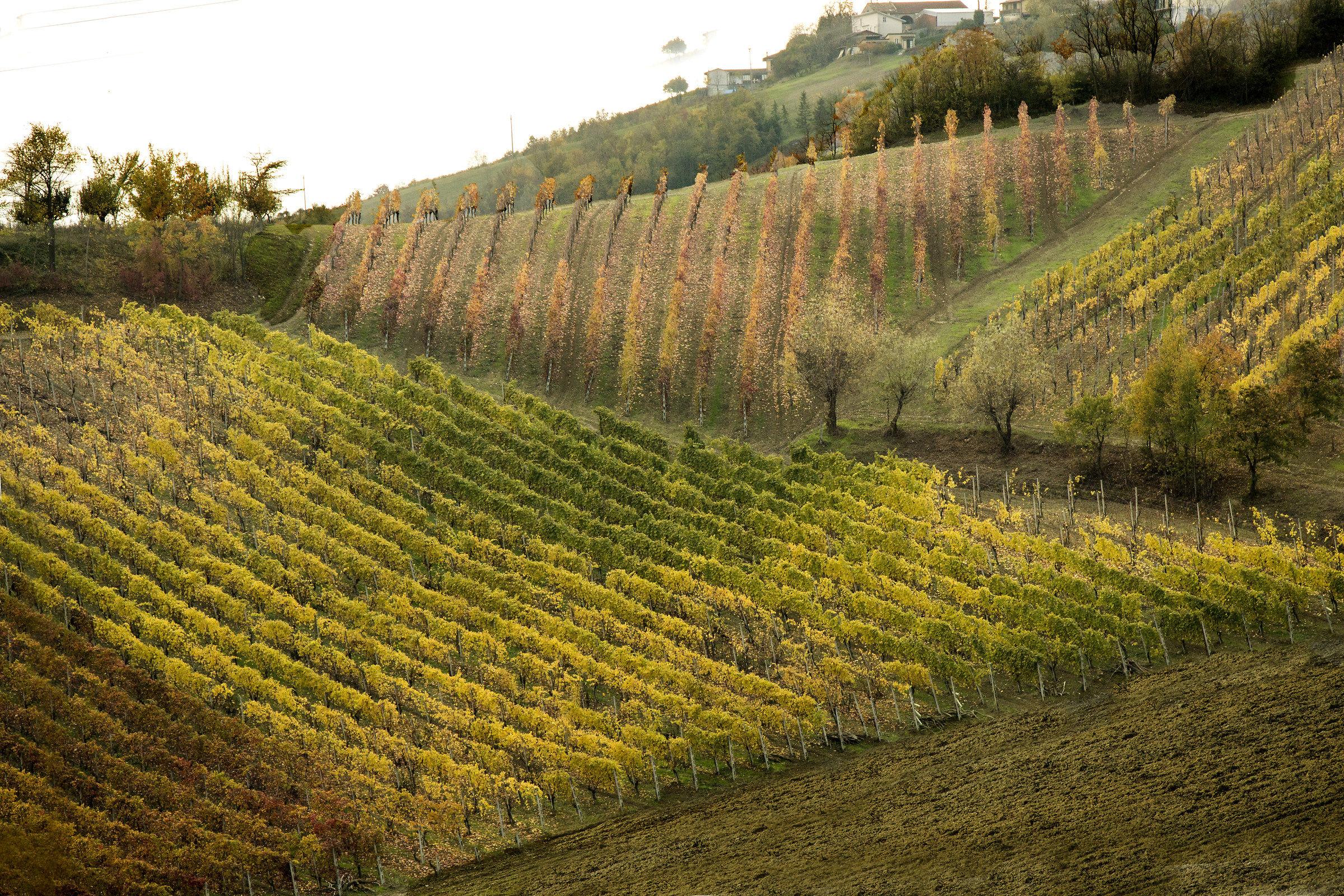 Piacenza hills in November...