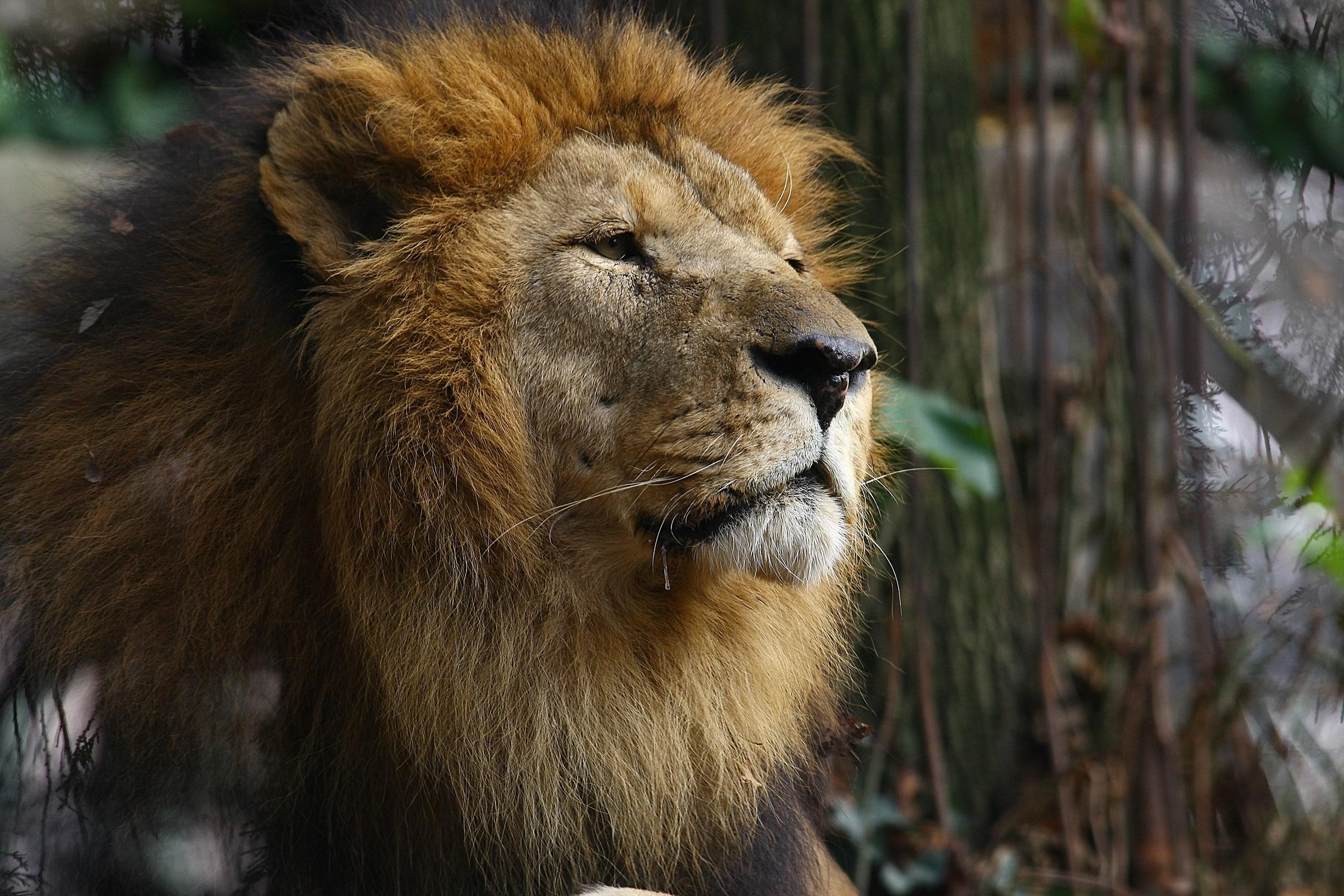 the king's gaze .....
