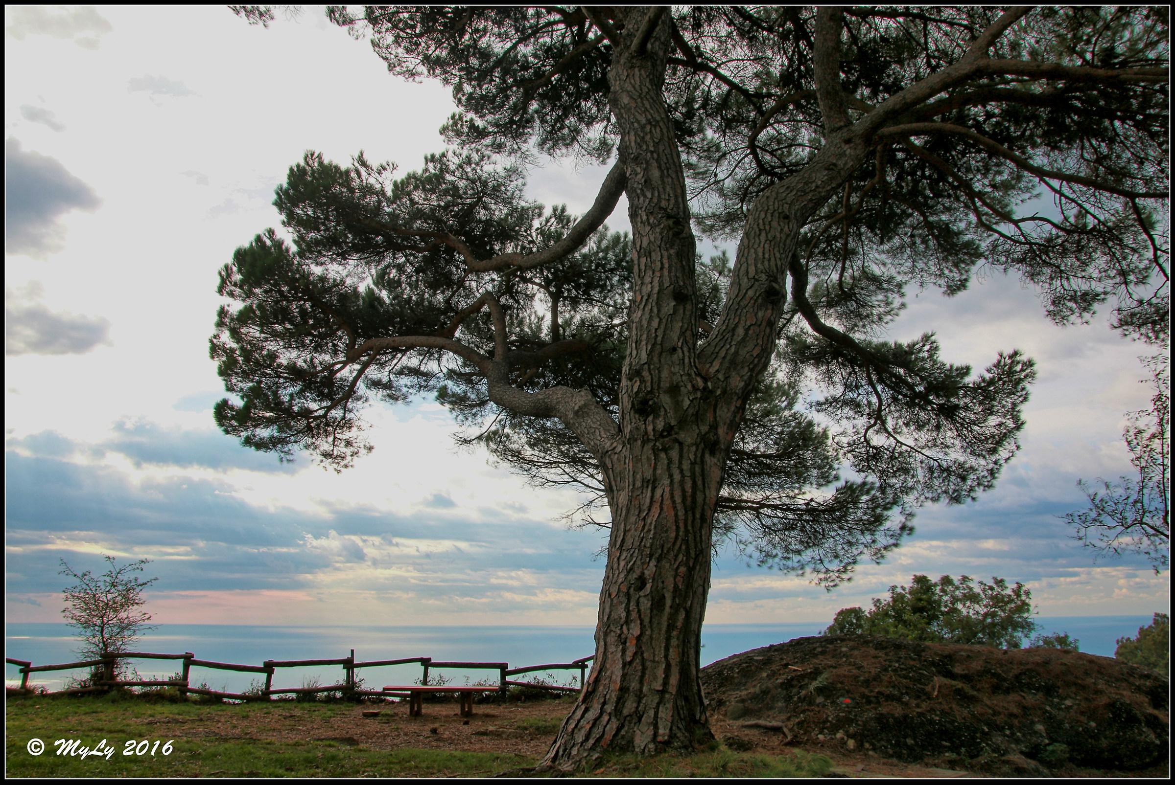 Tree of life...