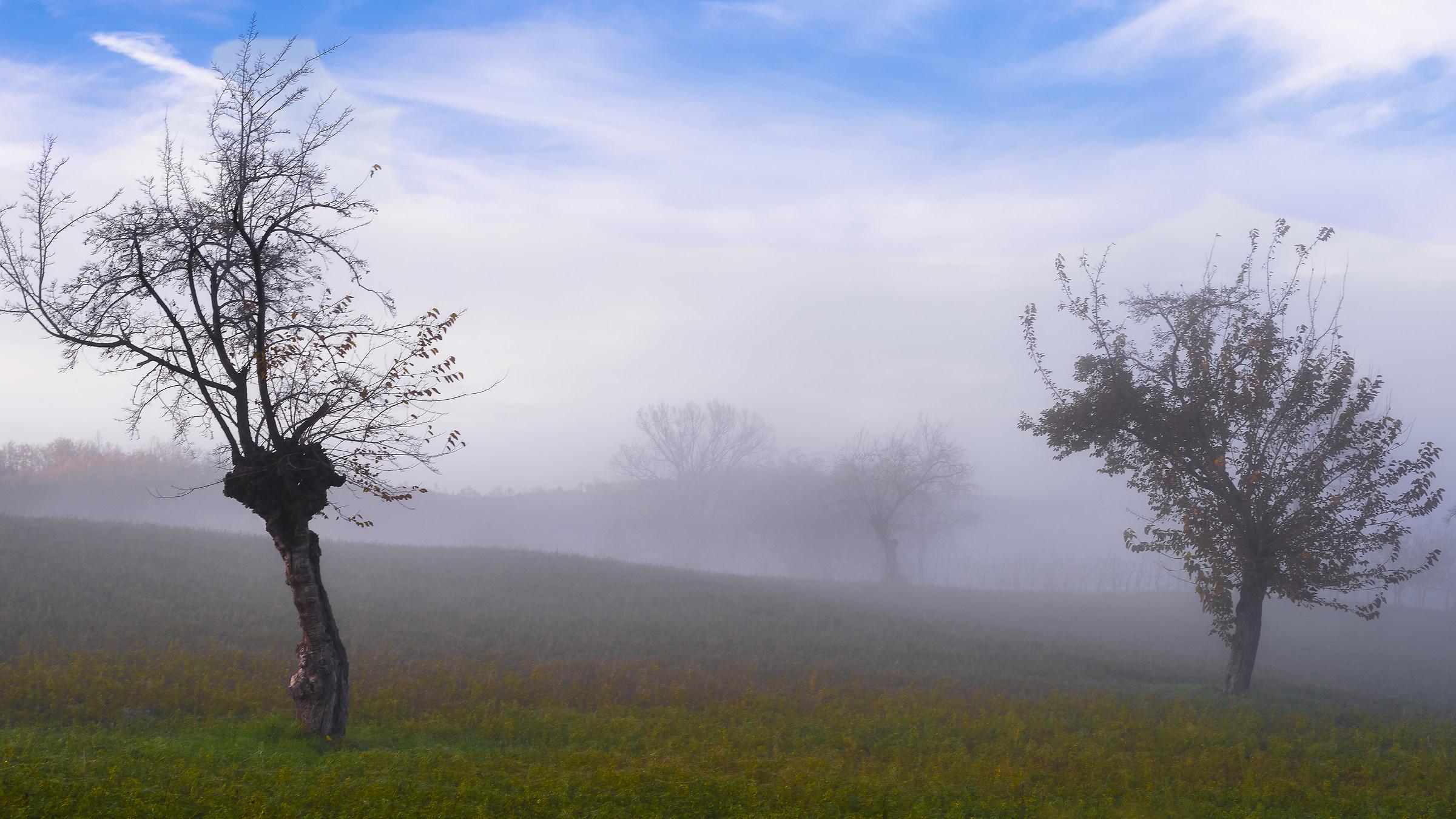 boundary line ... the sun and fog...