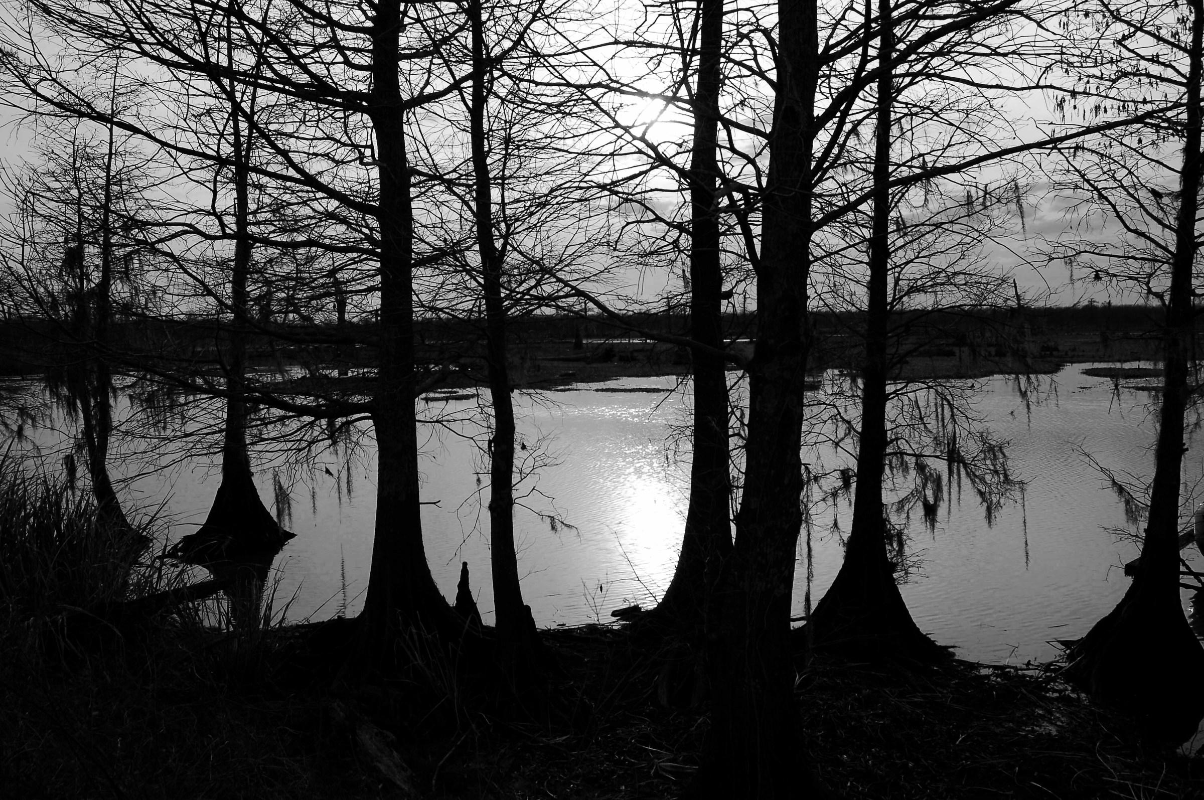 Louisiana's swamp...