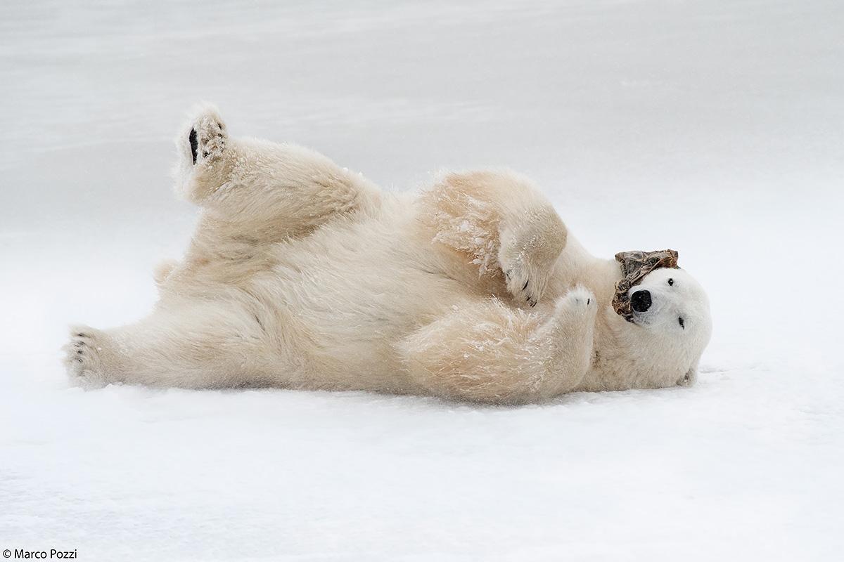on Ice...