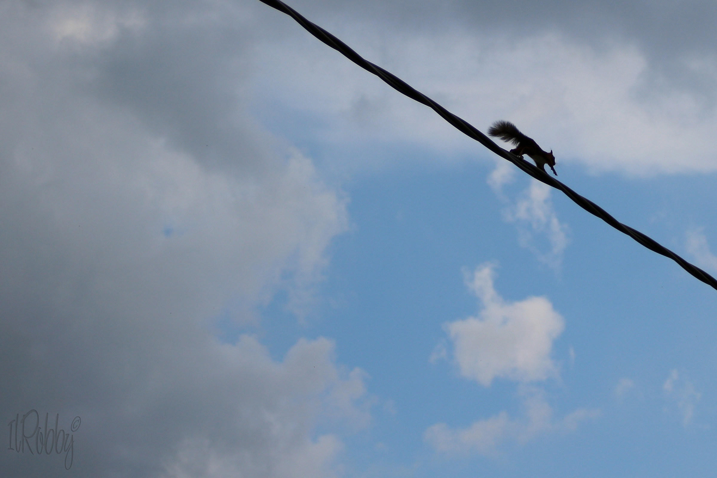 the tightrope walker...