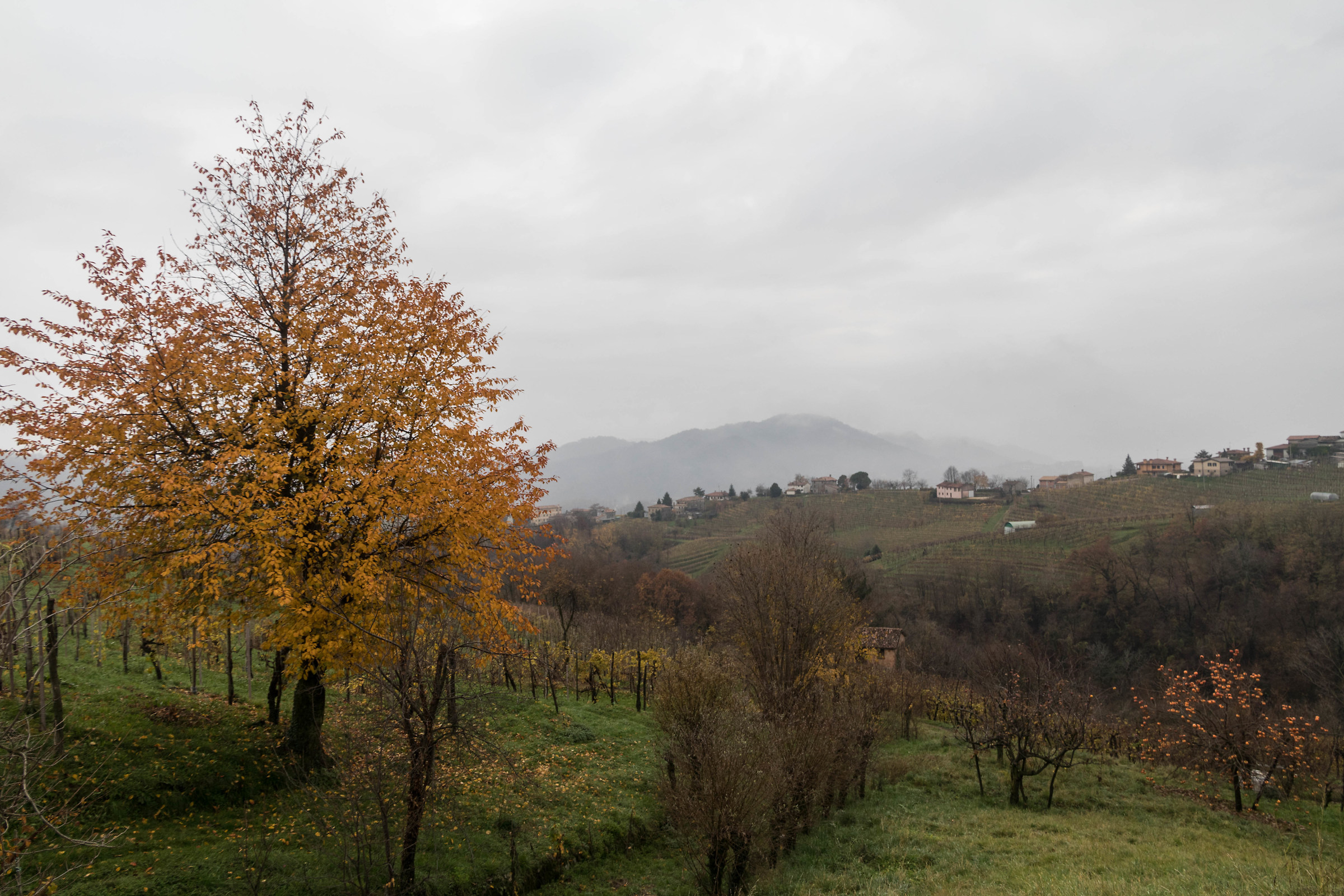 The hills of Prosecco...