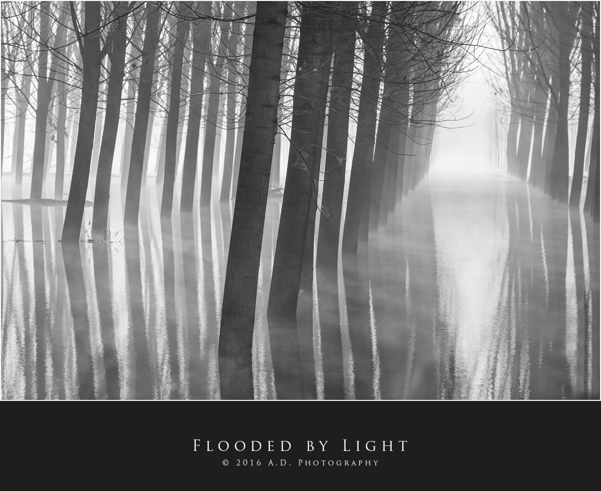Flooded by Light...