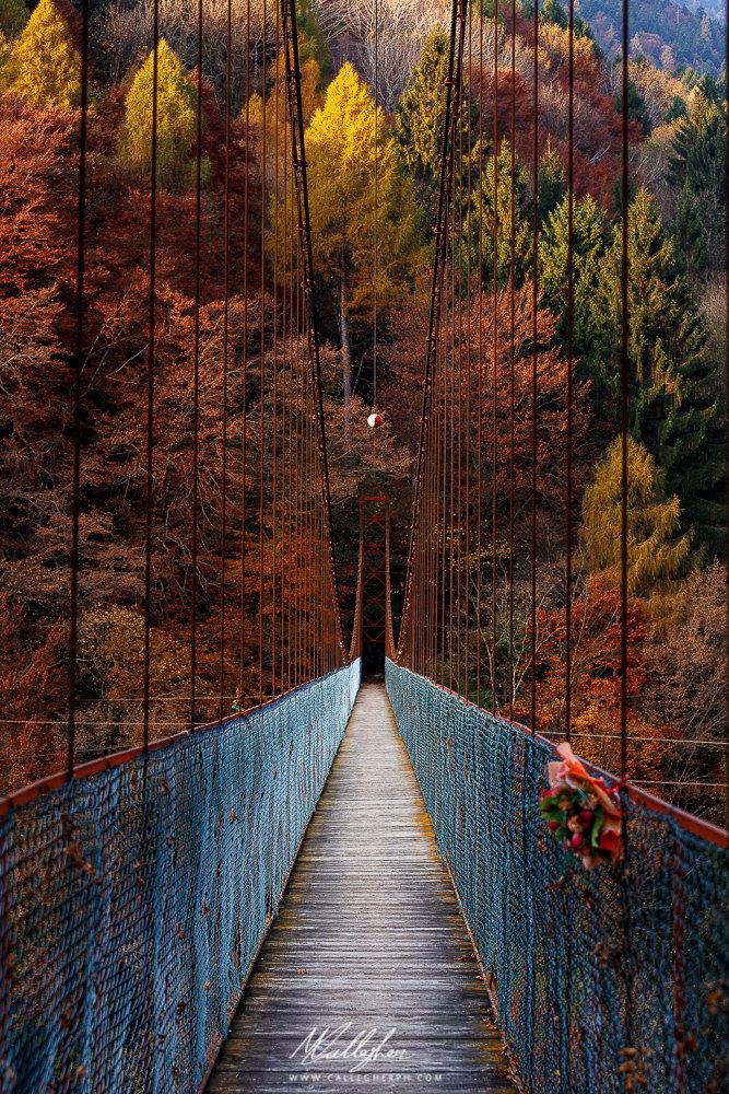 A bridge to autumn...