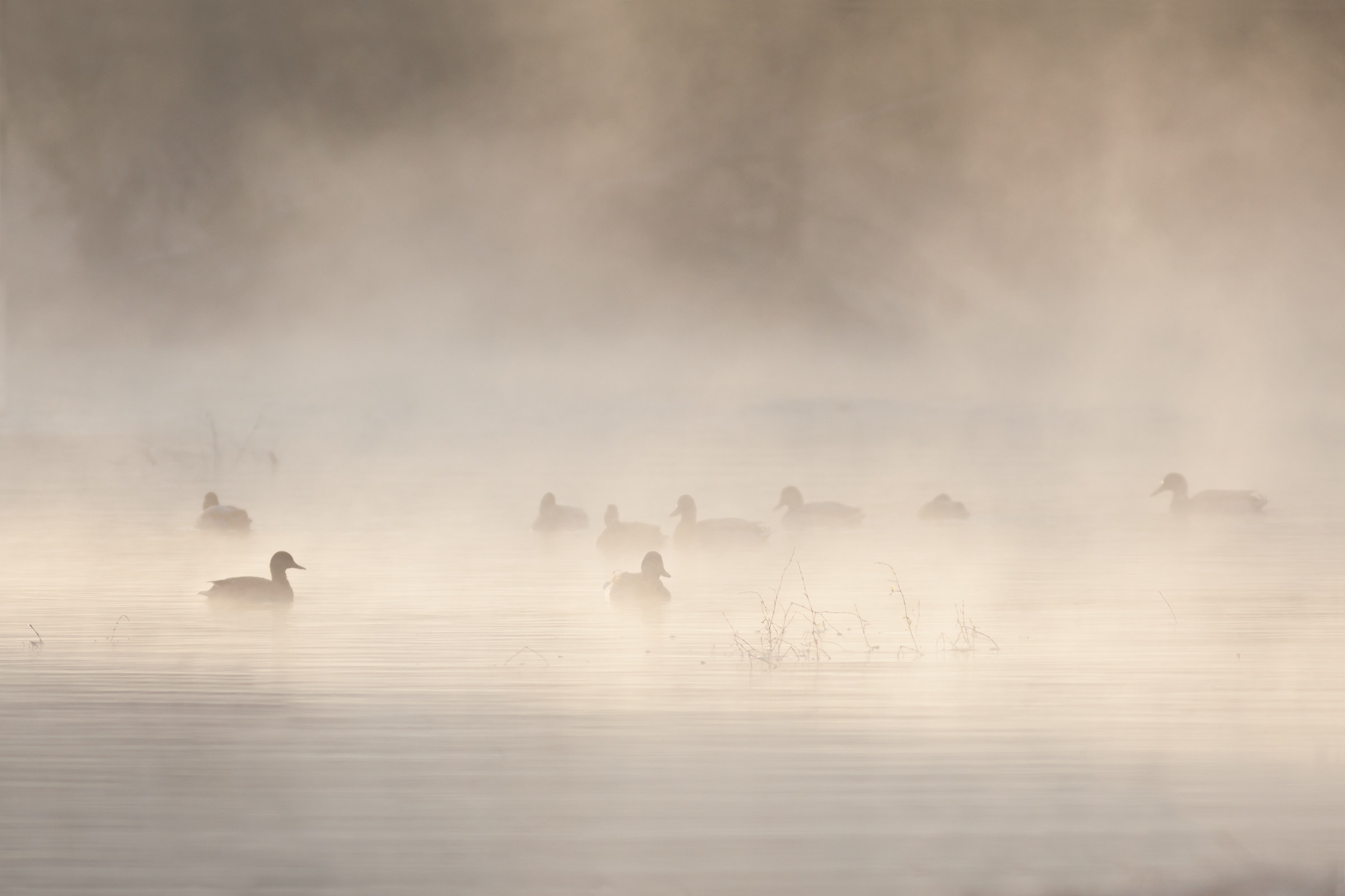 Tra la nebbia......