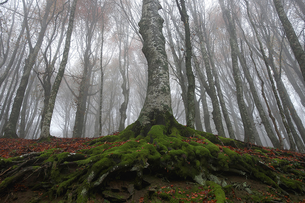 pn Casentino Forests 2016...