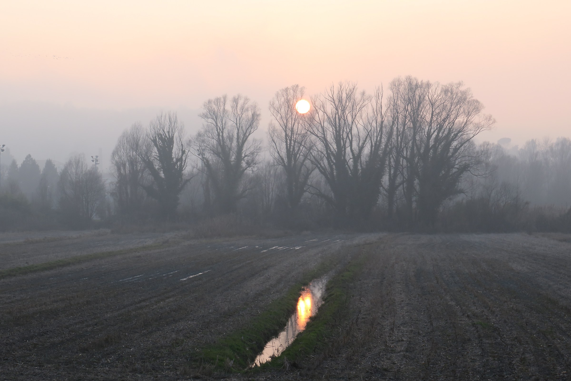 tramonto  nella nebbiosa campagna lombarda...