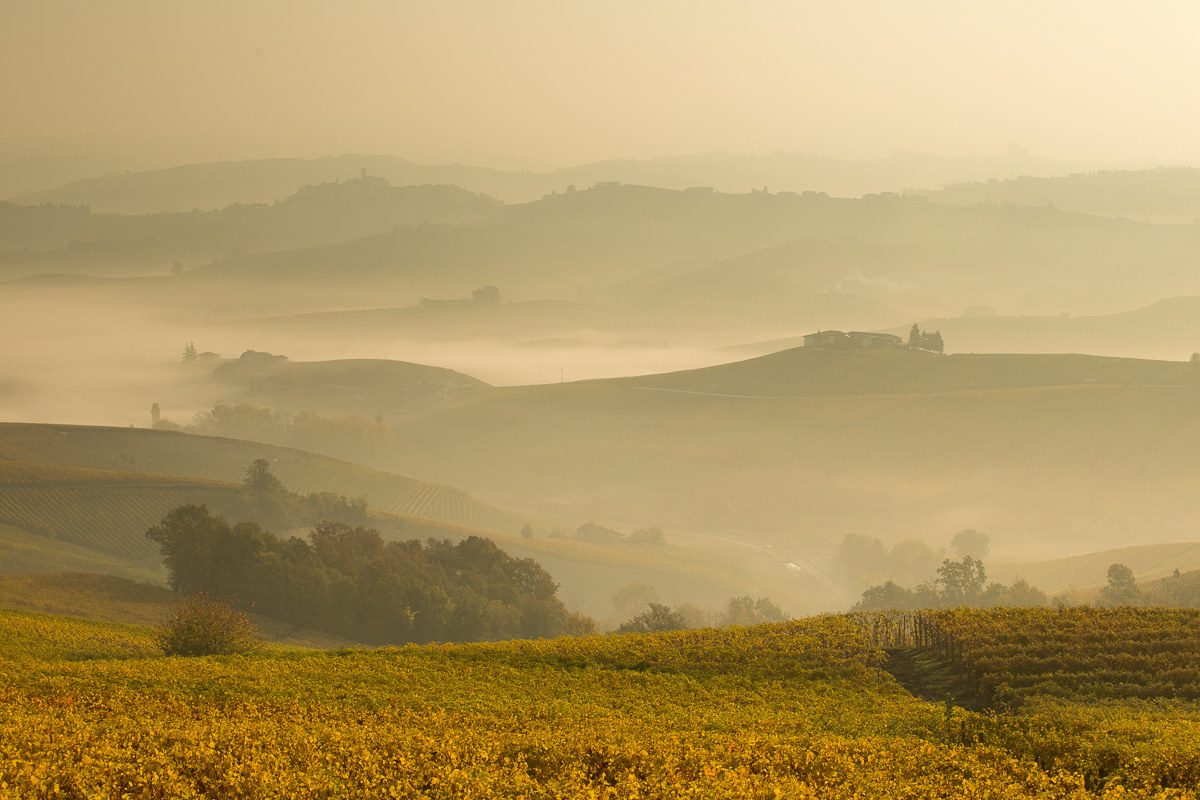 of gold and fog...