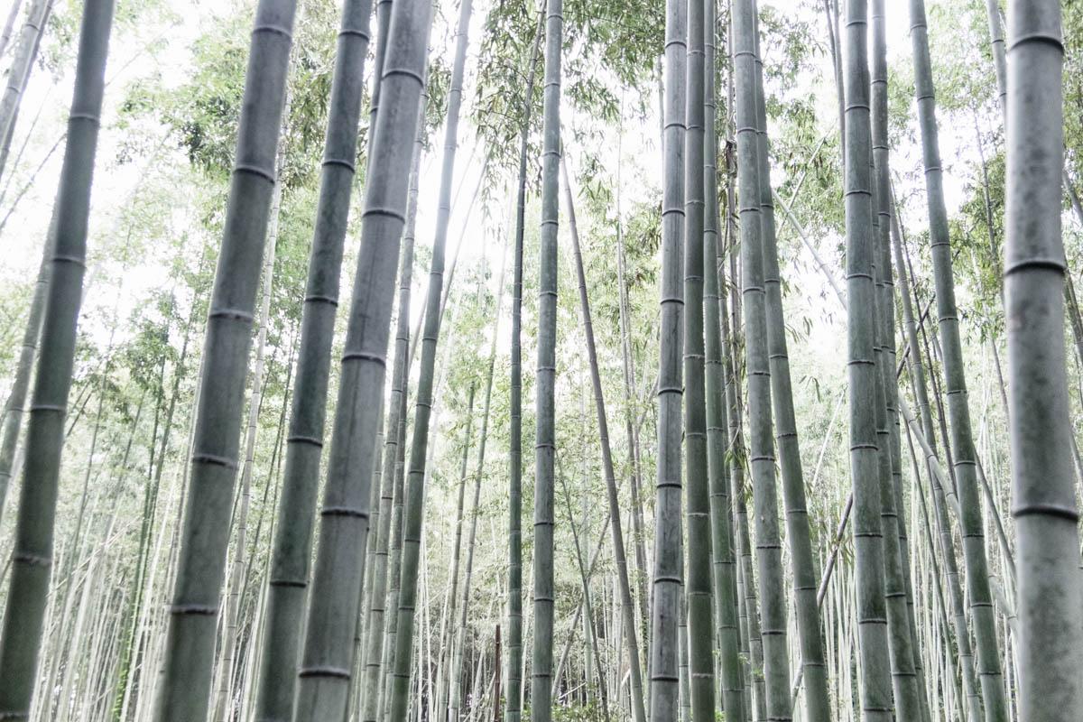 Bamboo...
