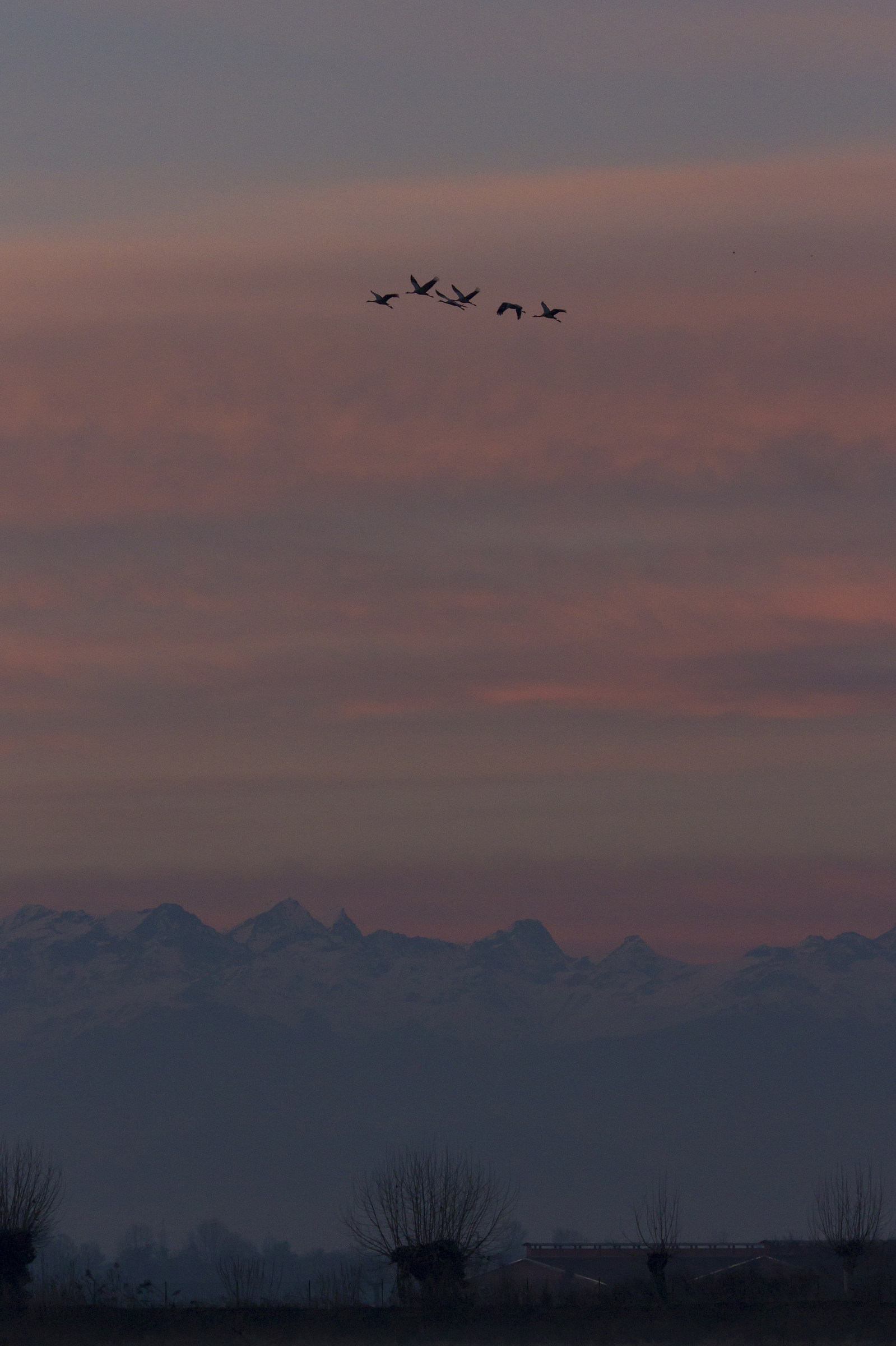 cranes flying at sunset...
