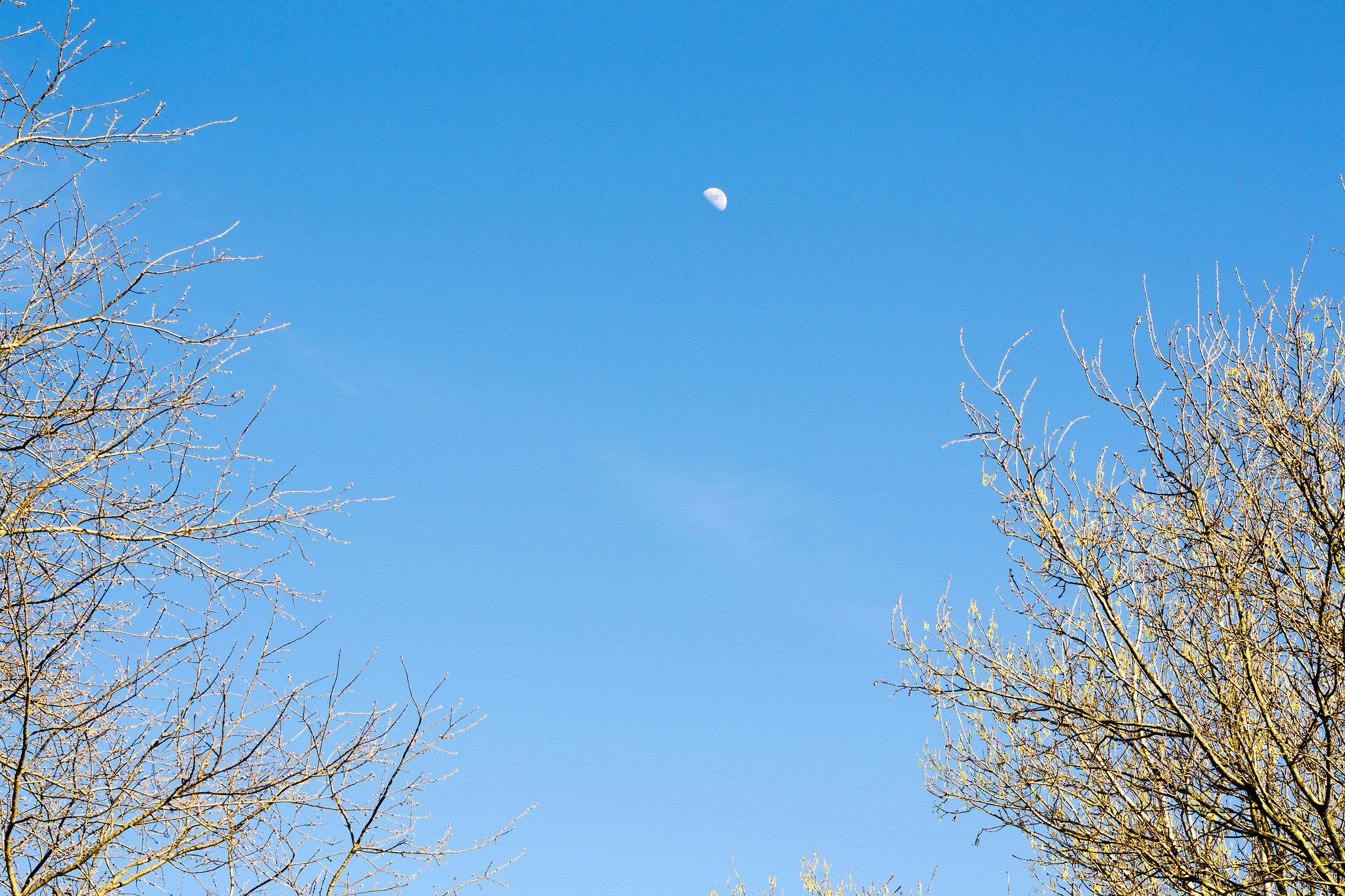 Moon in broad daylight...