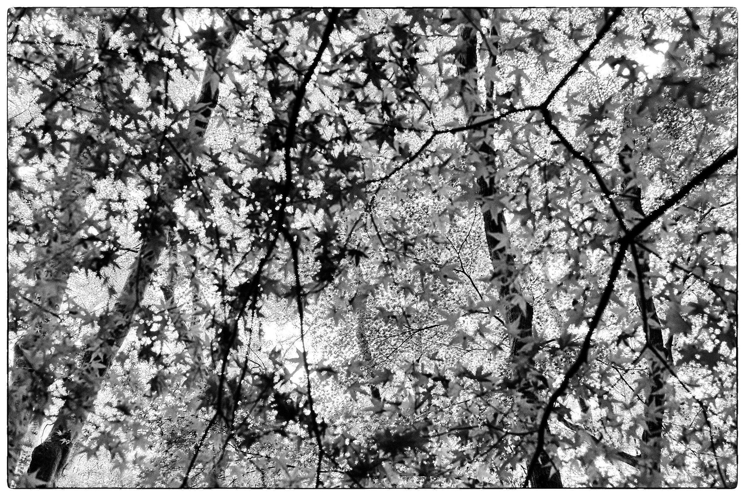 Under the star tree...