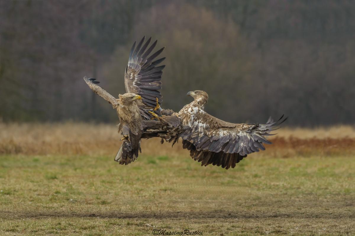 Eagles mare..Polonia 2016...