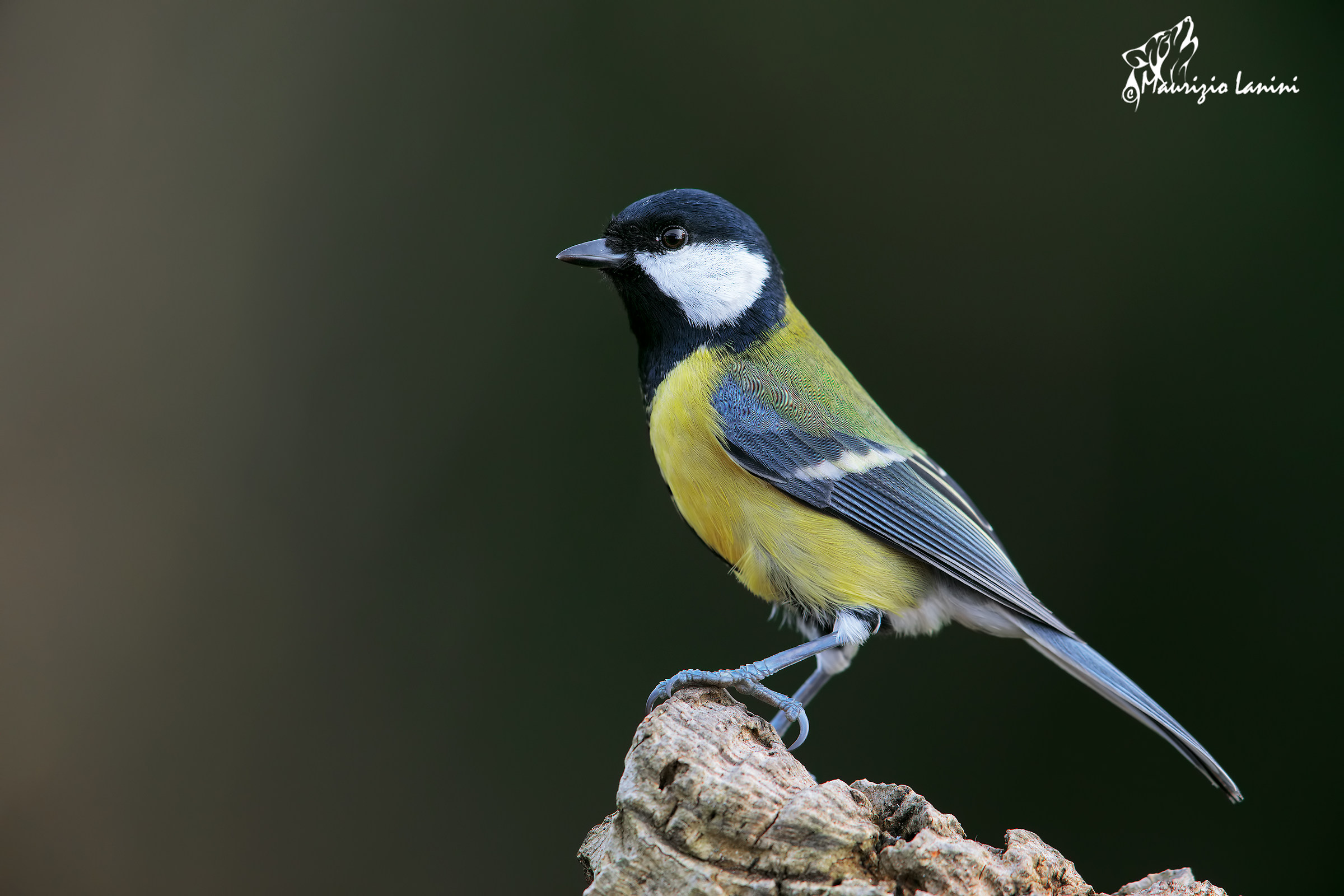 Tit with 5 D MKIV...