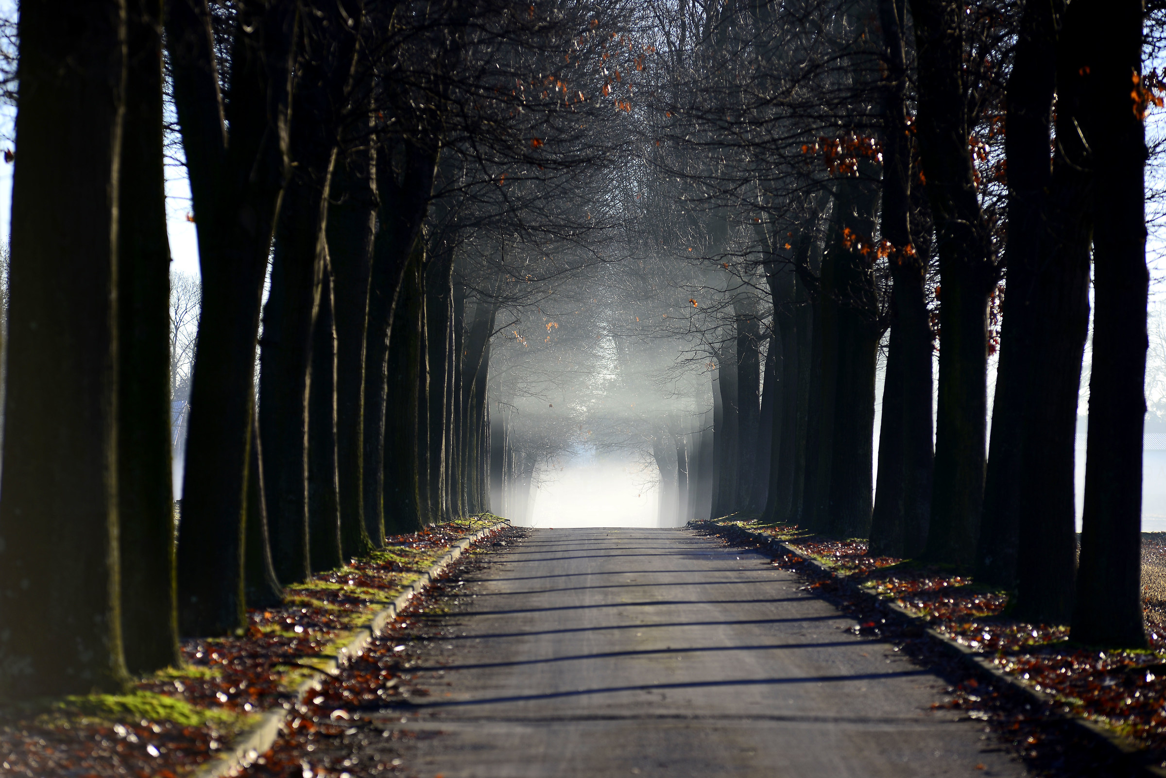 La via verso l'ignoto...