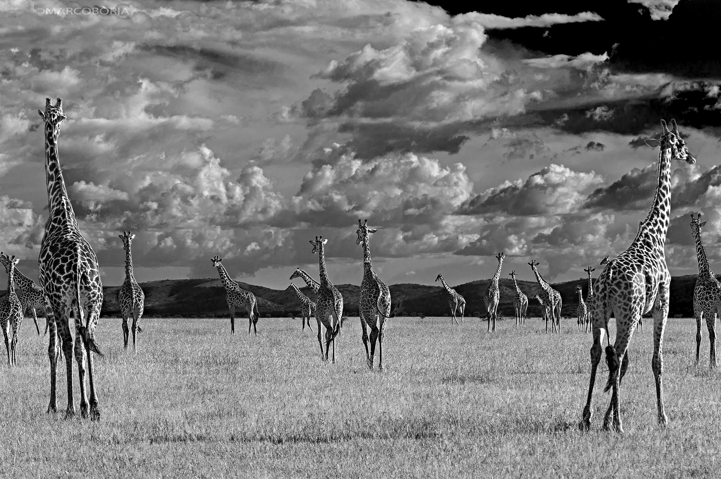 Grumeti, Tanzania Private Reserve...