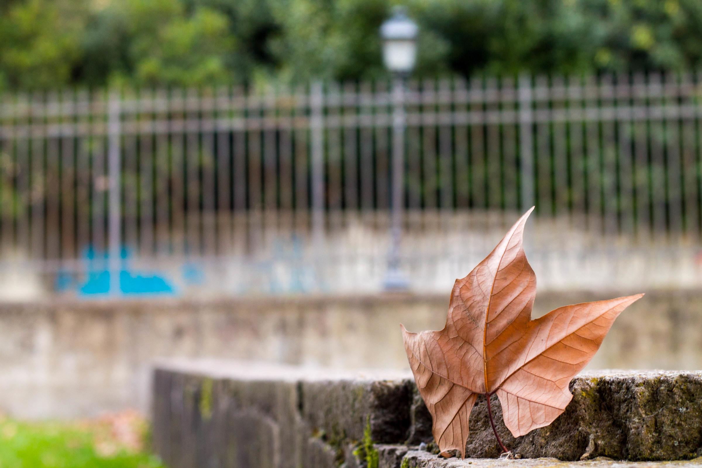 rebel leaf...