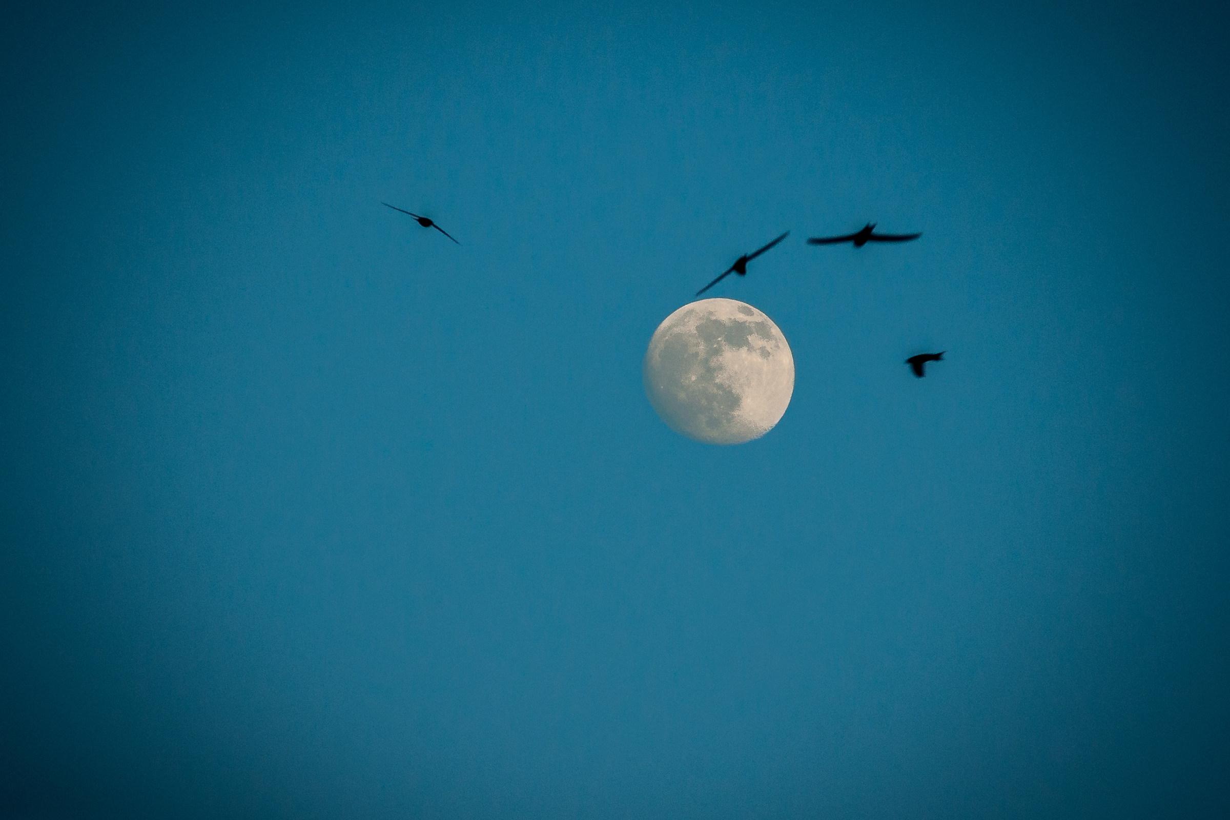 swallows...