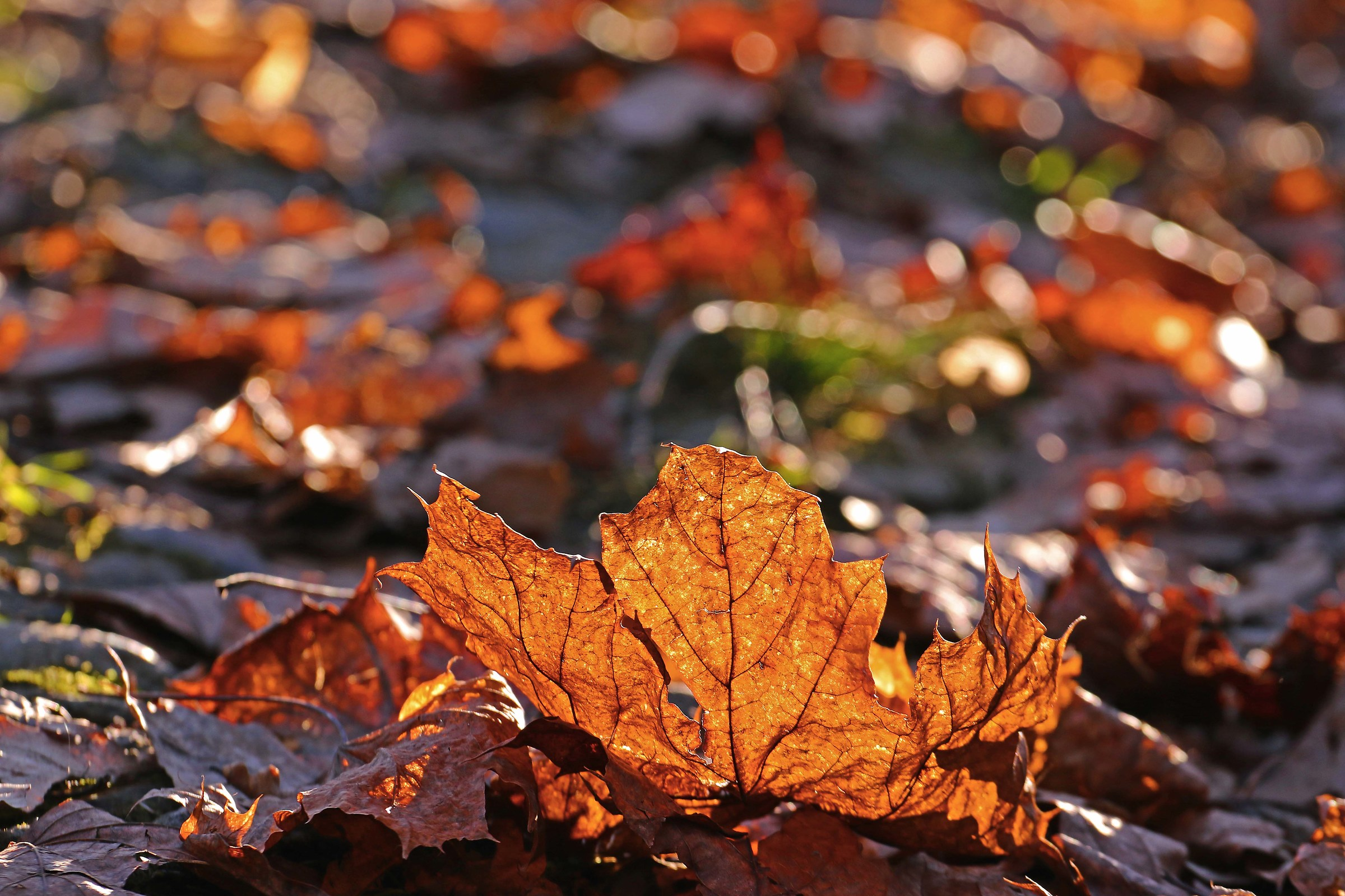 Leaves and sun...