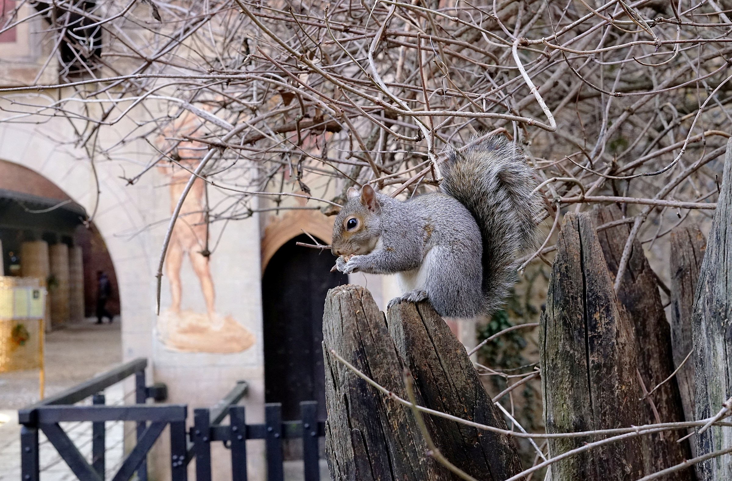 Squirrel at the castle ......