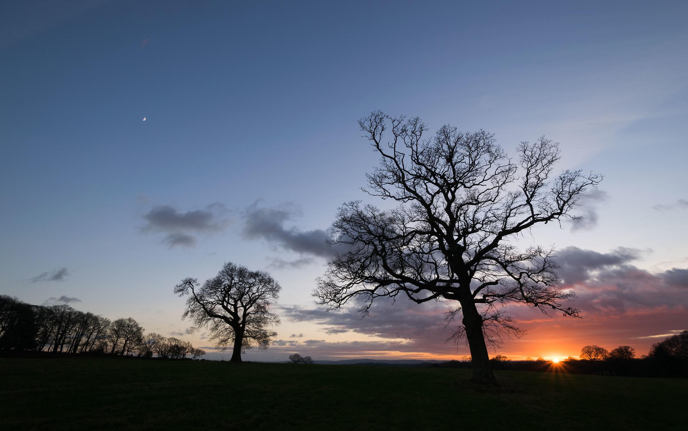 Waving Trees..... And A Tiny Moon...