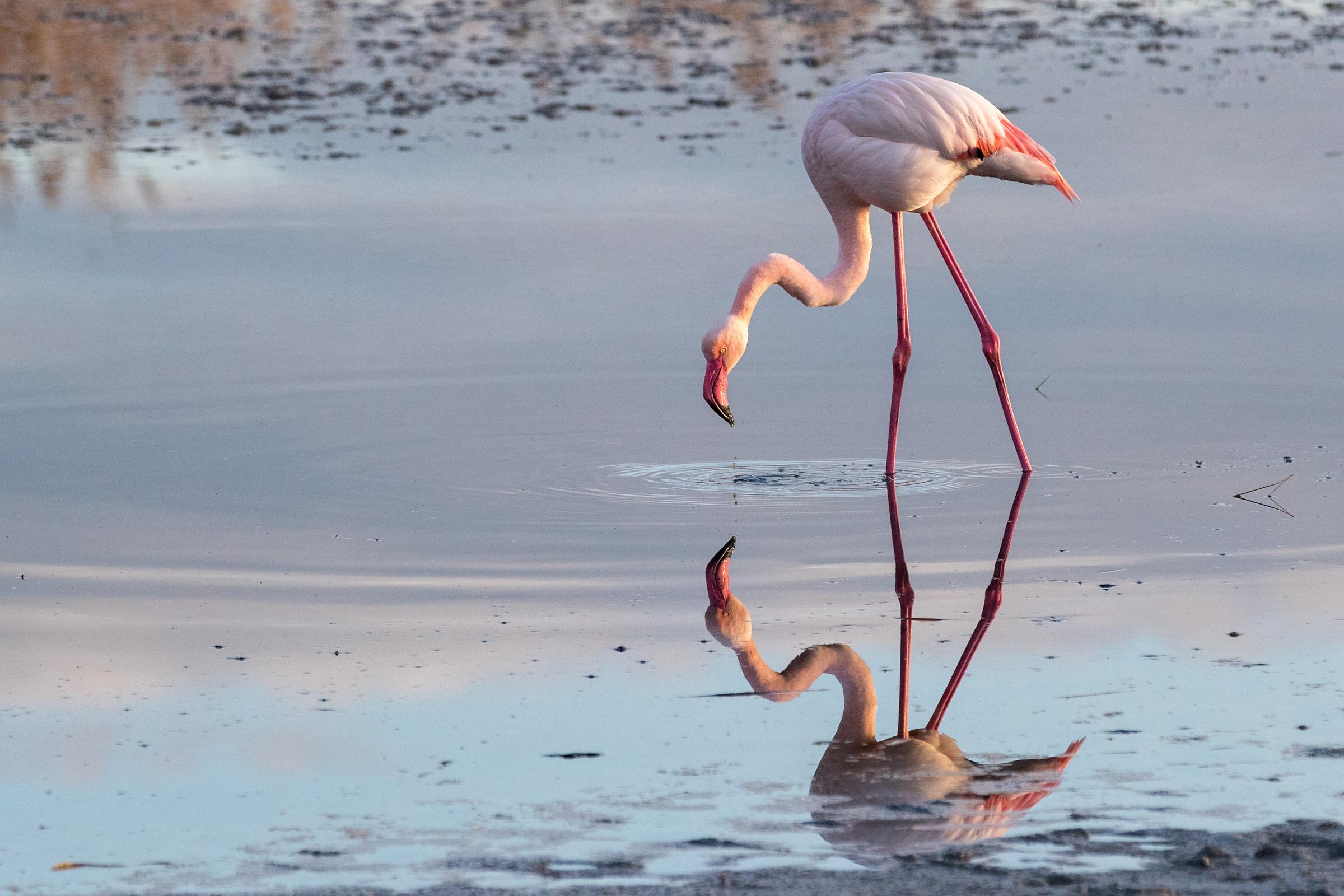 Allo specchio juzaphoto - L immagine allo specchio streaming ...