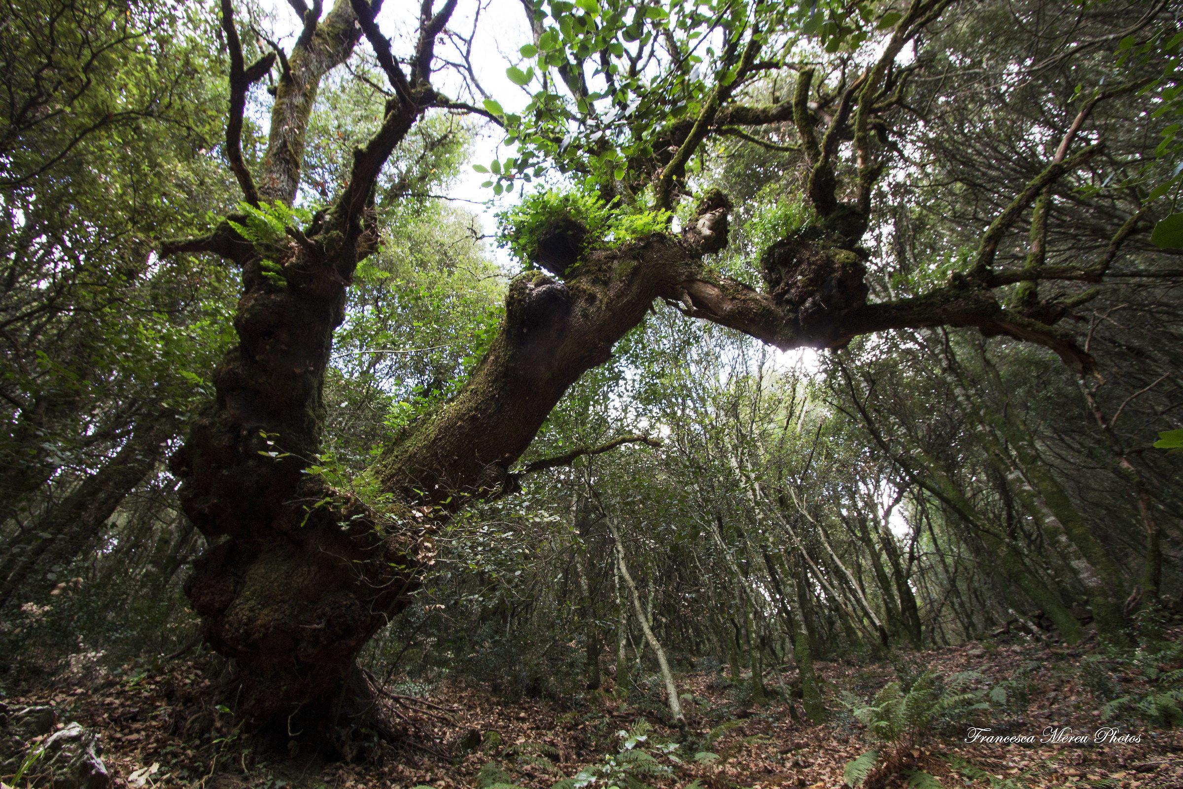 The enchanted tree....