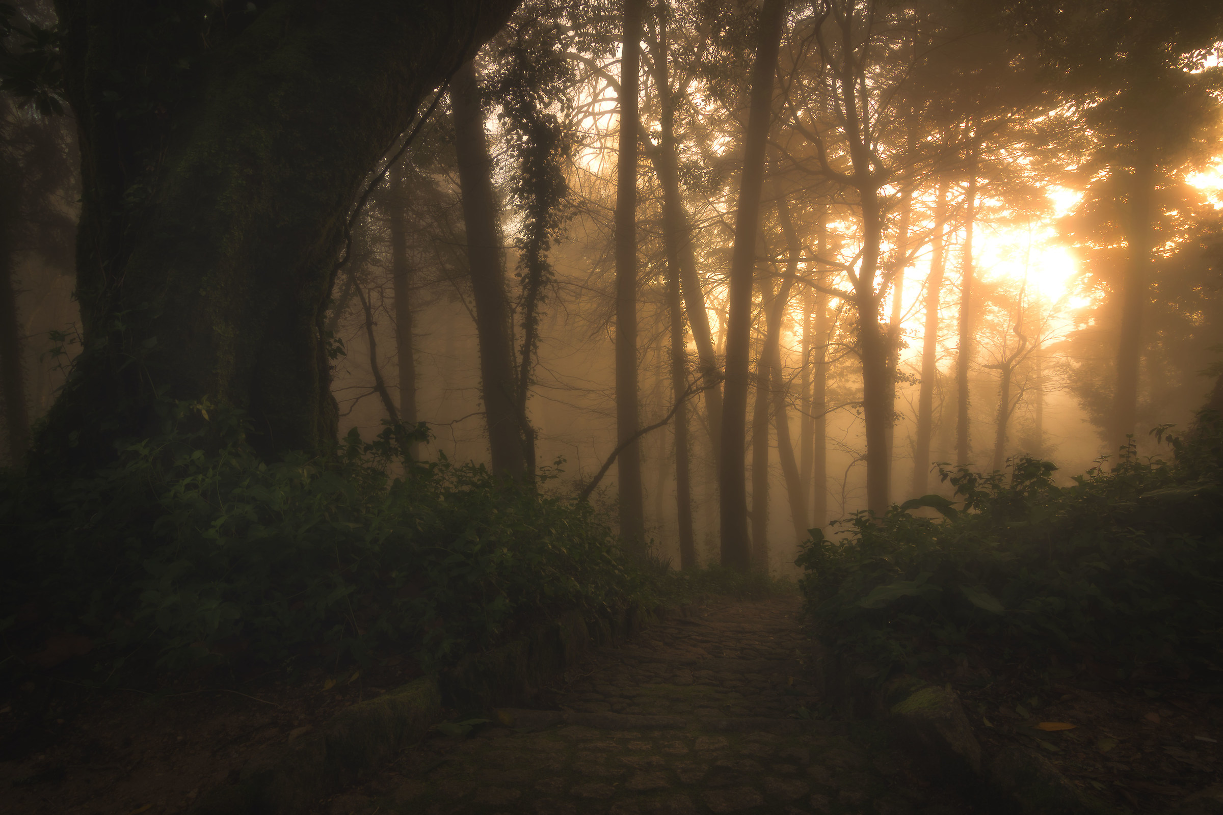 Woods light...