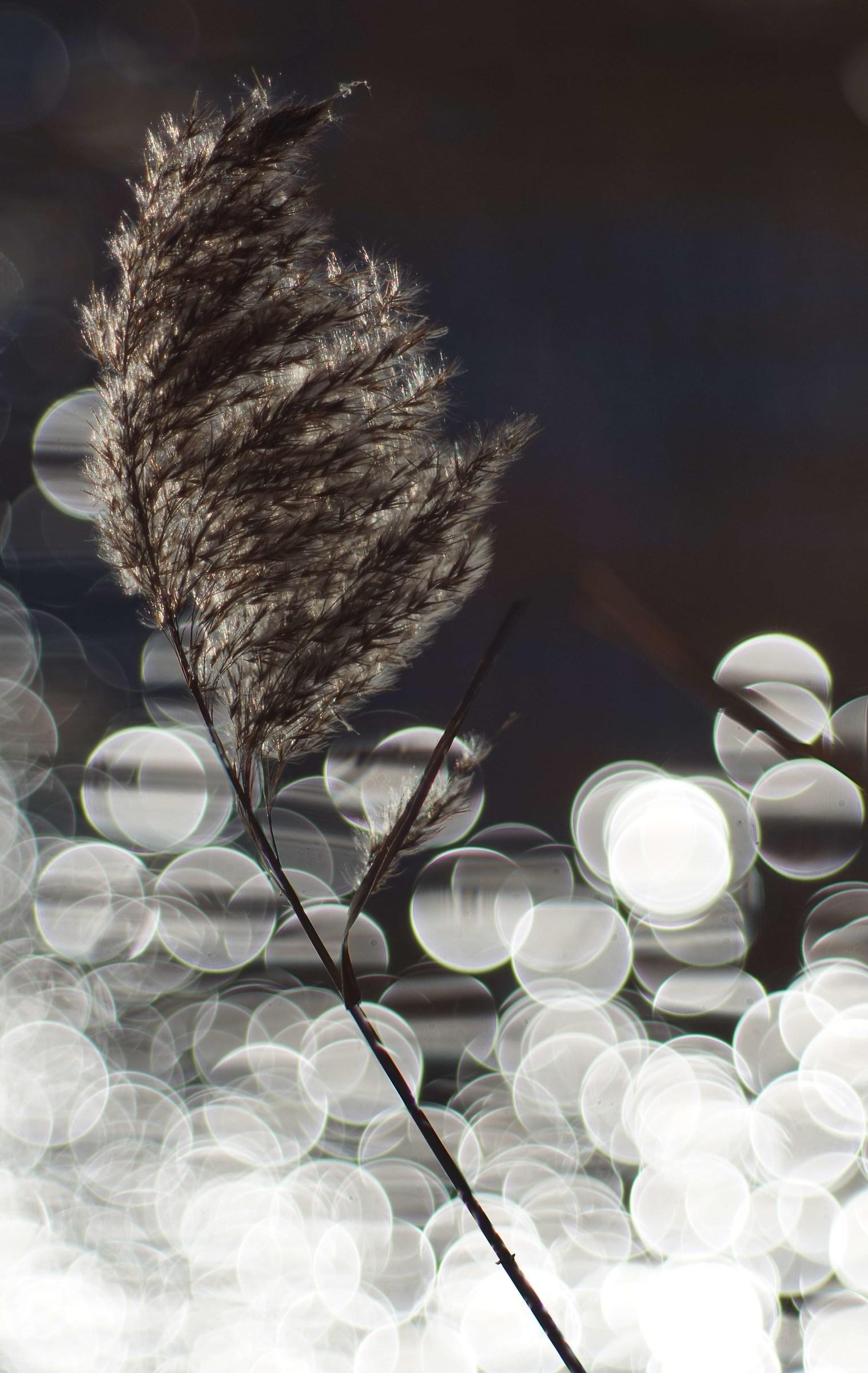 Bubbles of light...
