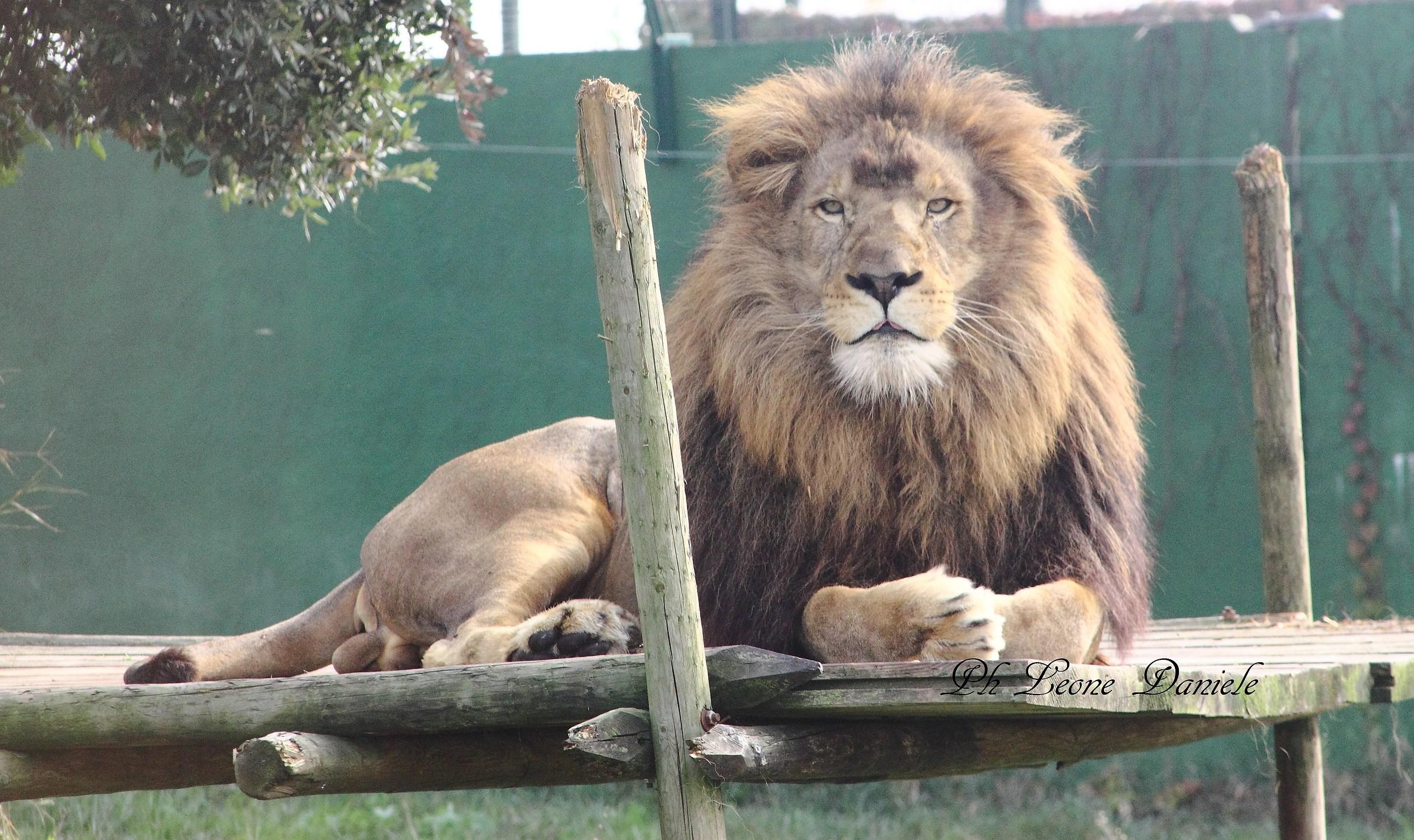 1 leone...