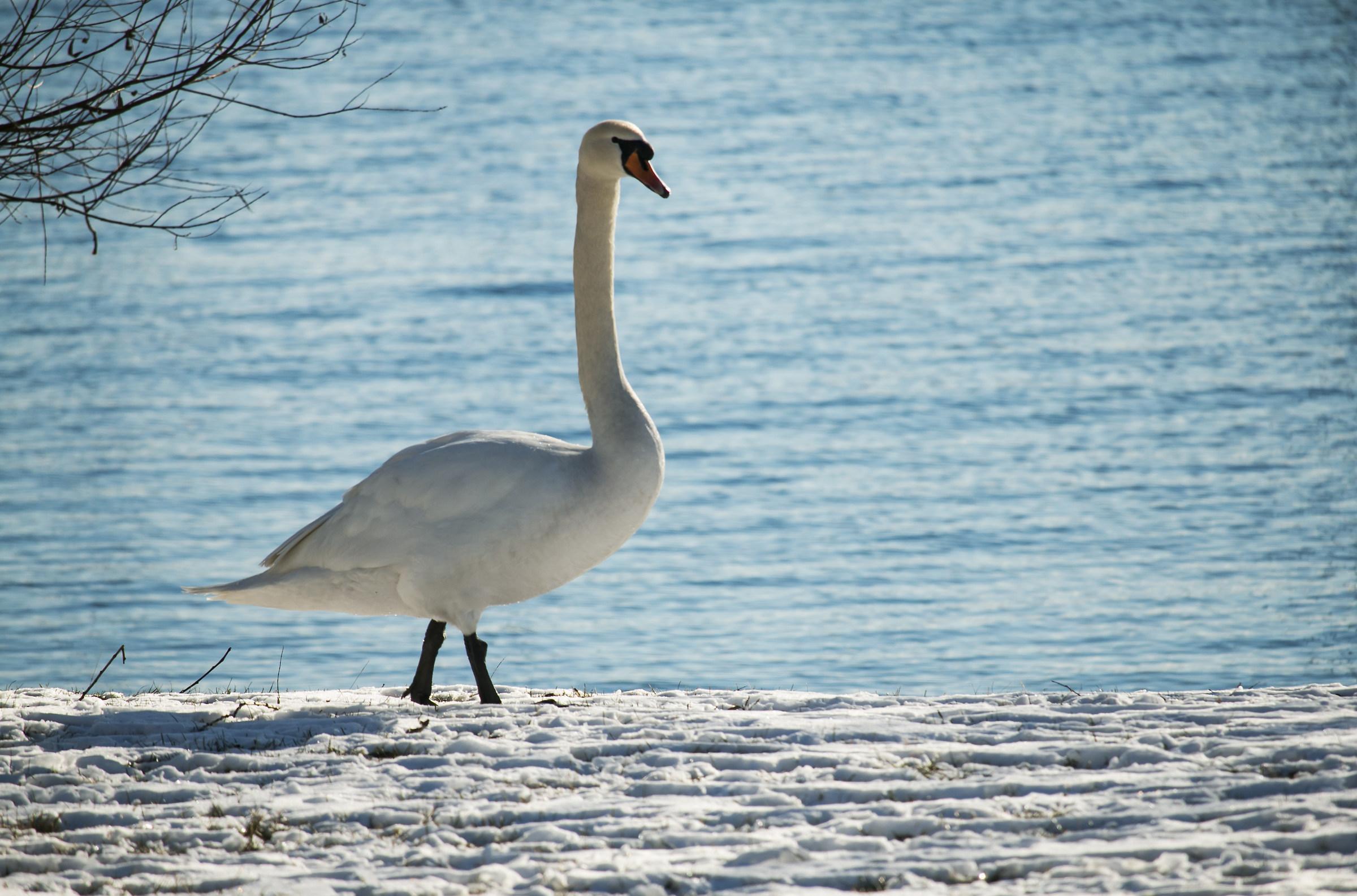 Between Lake and Snow...