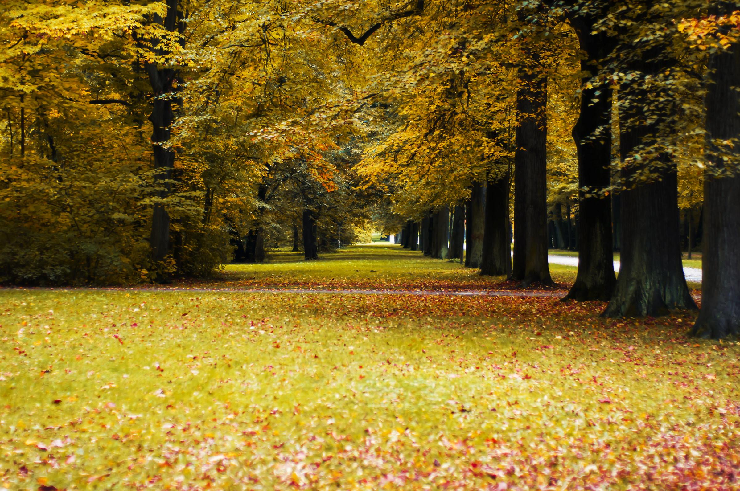 Grosser Park...