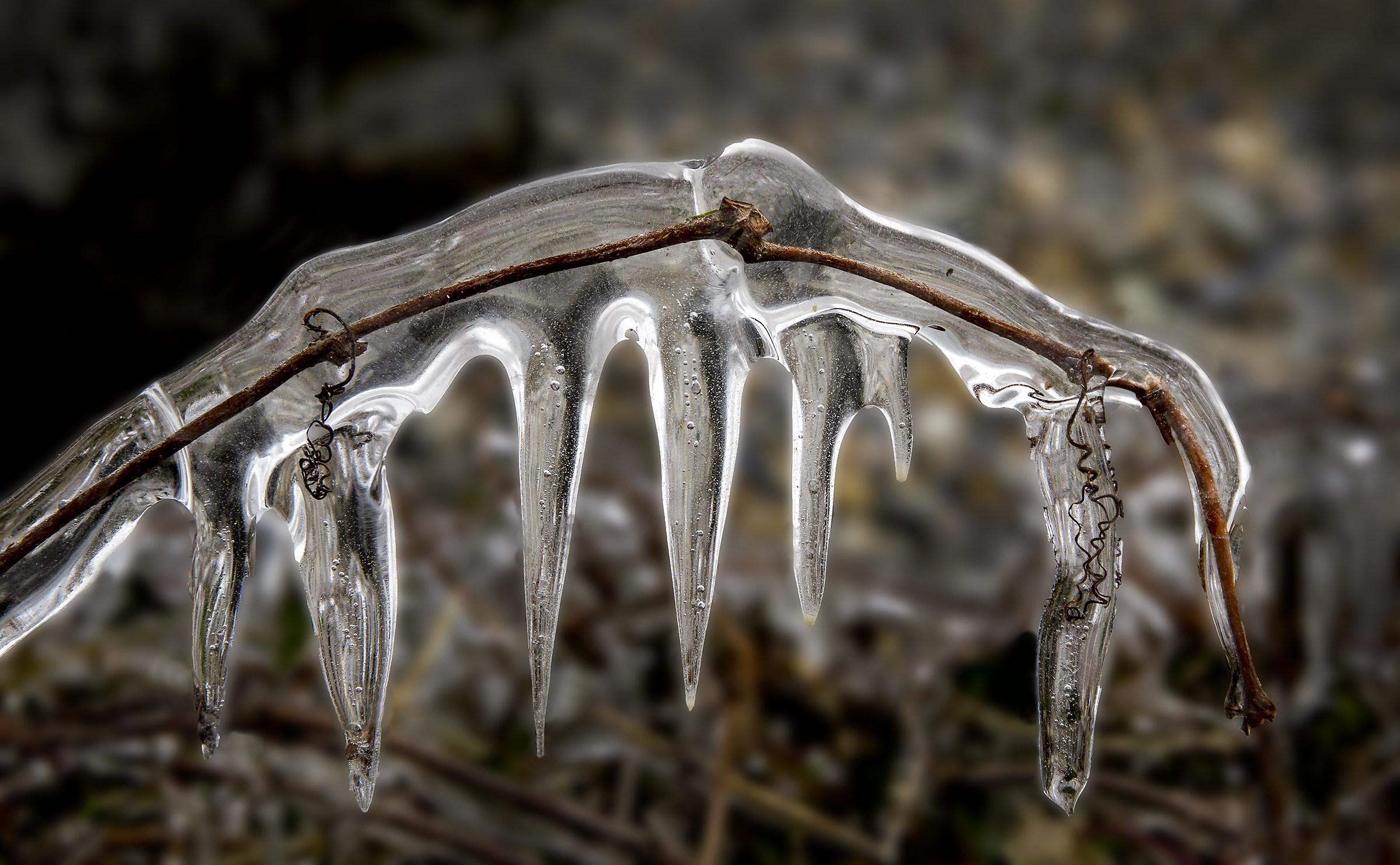 shark teeth in the ice...