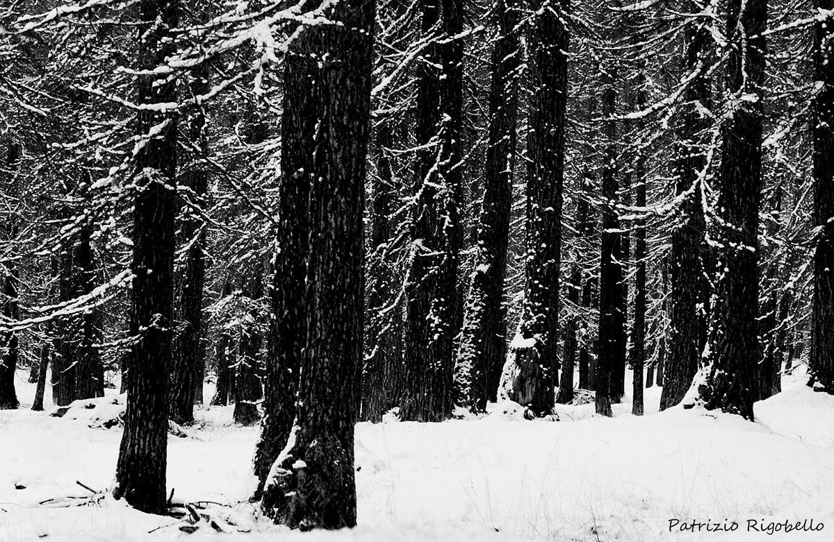 The Winter Tree...