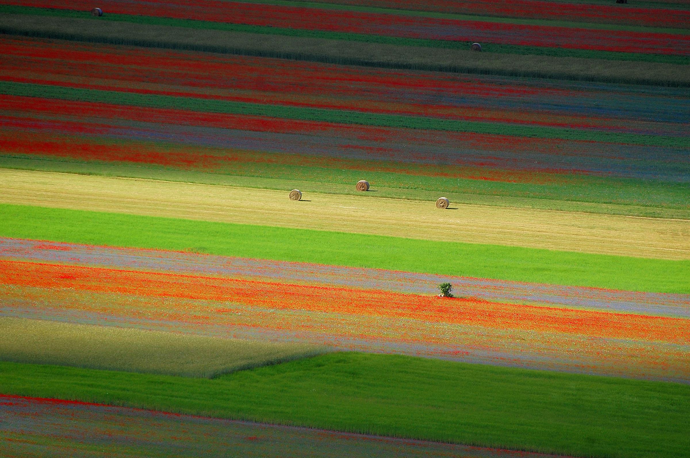 Castelluccio: color between light and shadow...