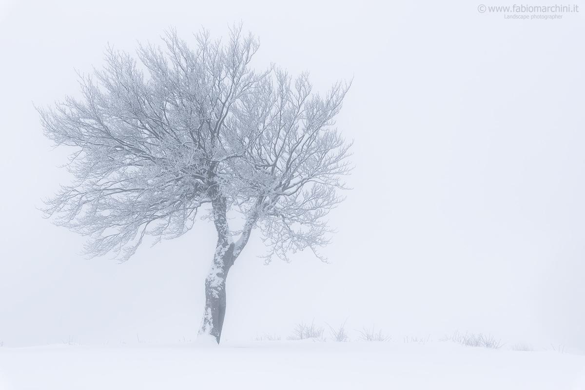 In white...