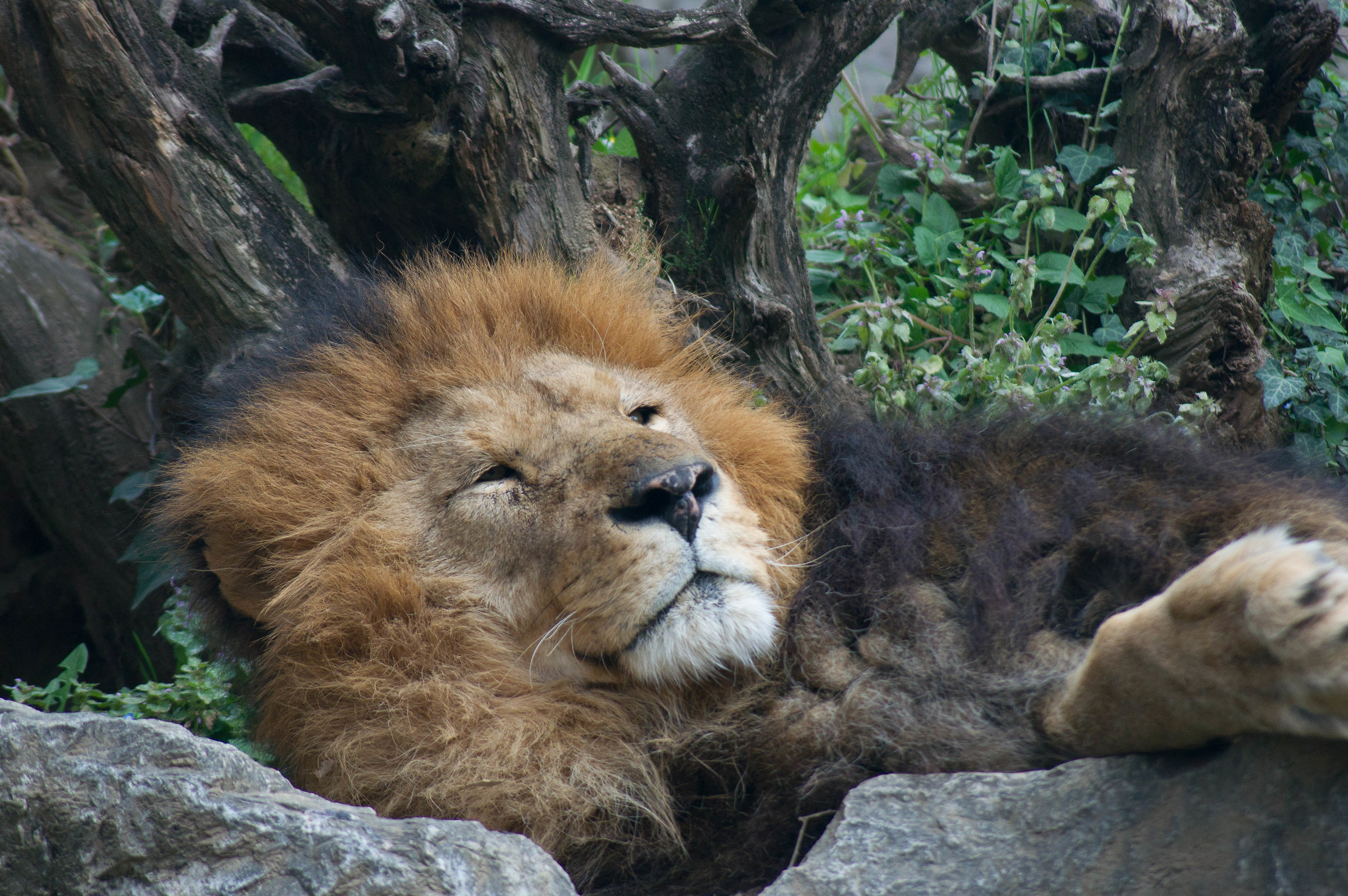 King rests...