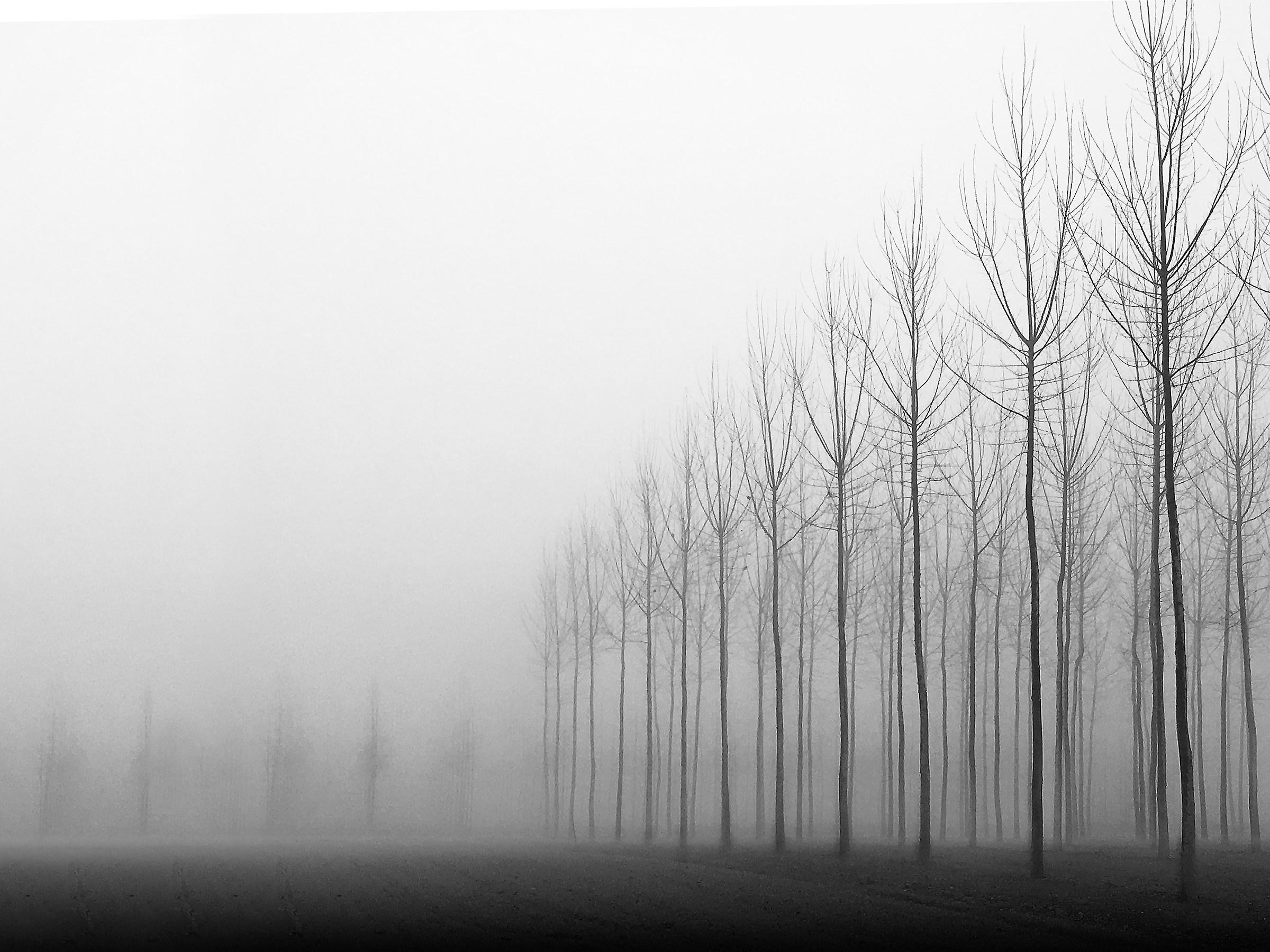 fog...
