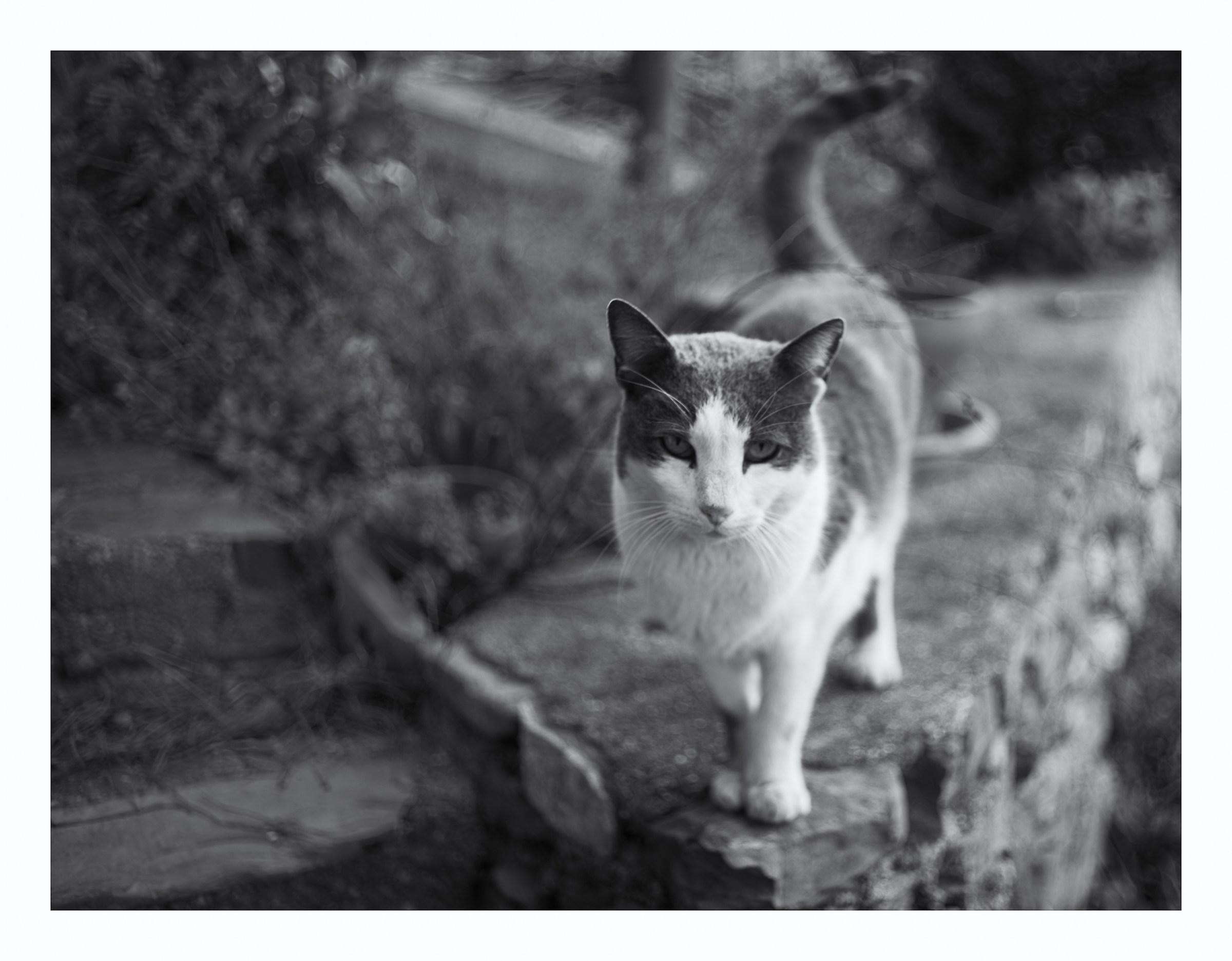 Camilla Cat...