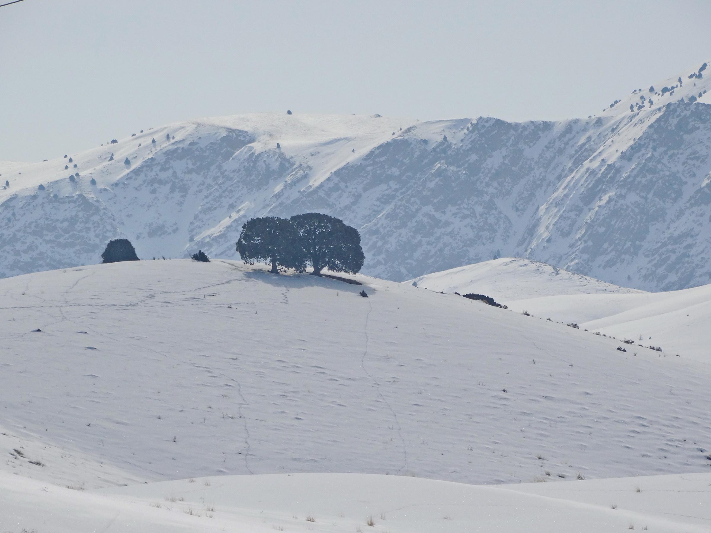 Twin alone trees...