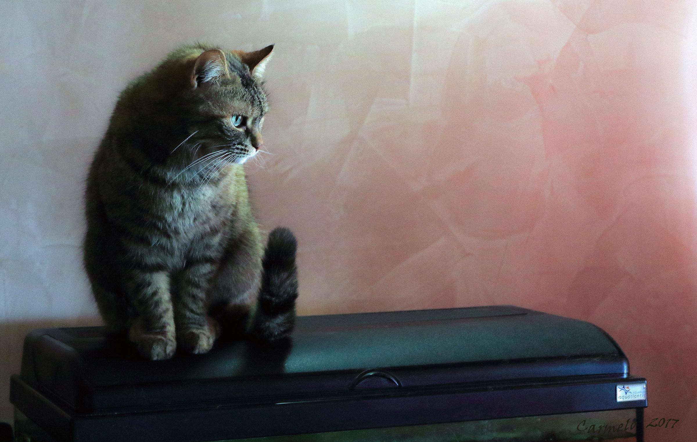 il gatto di Isa...
