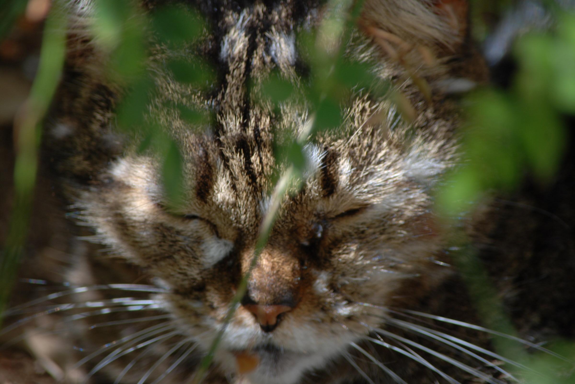 my tiger...