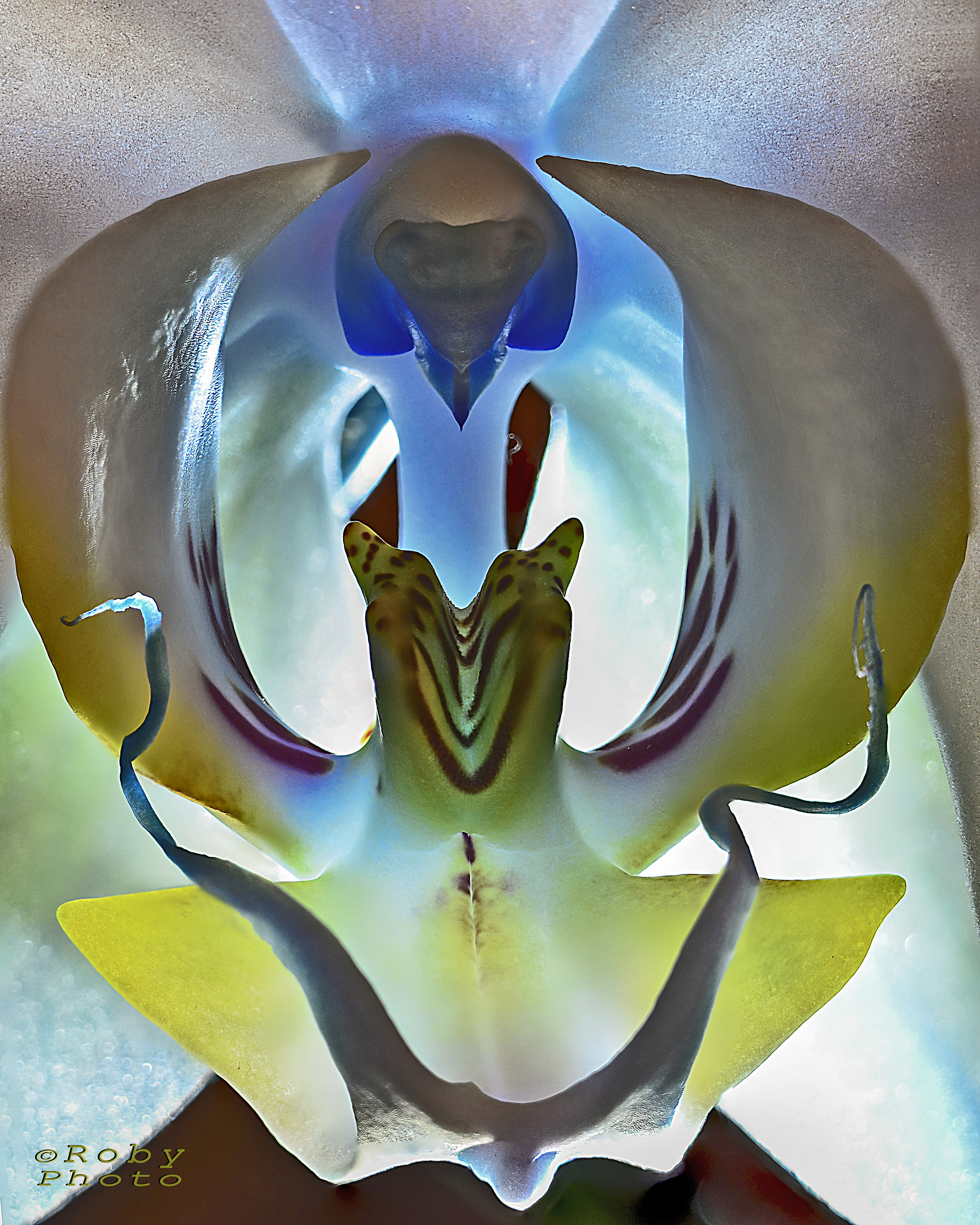 natural symmetries ......