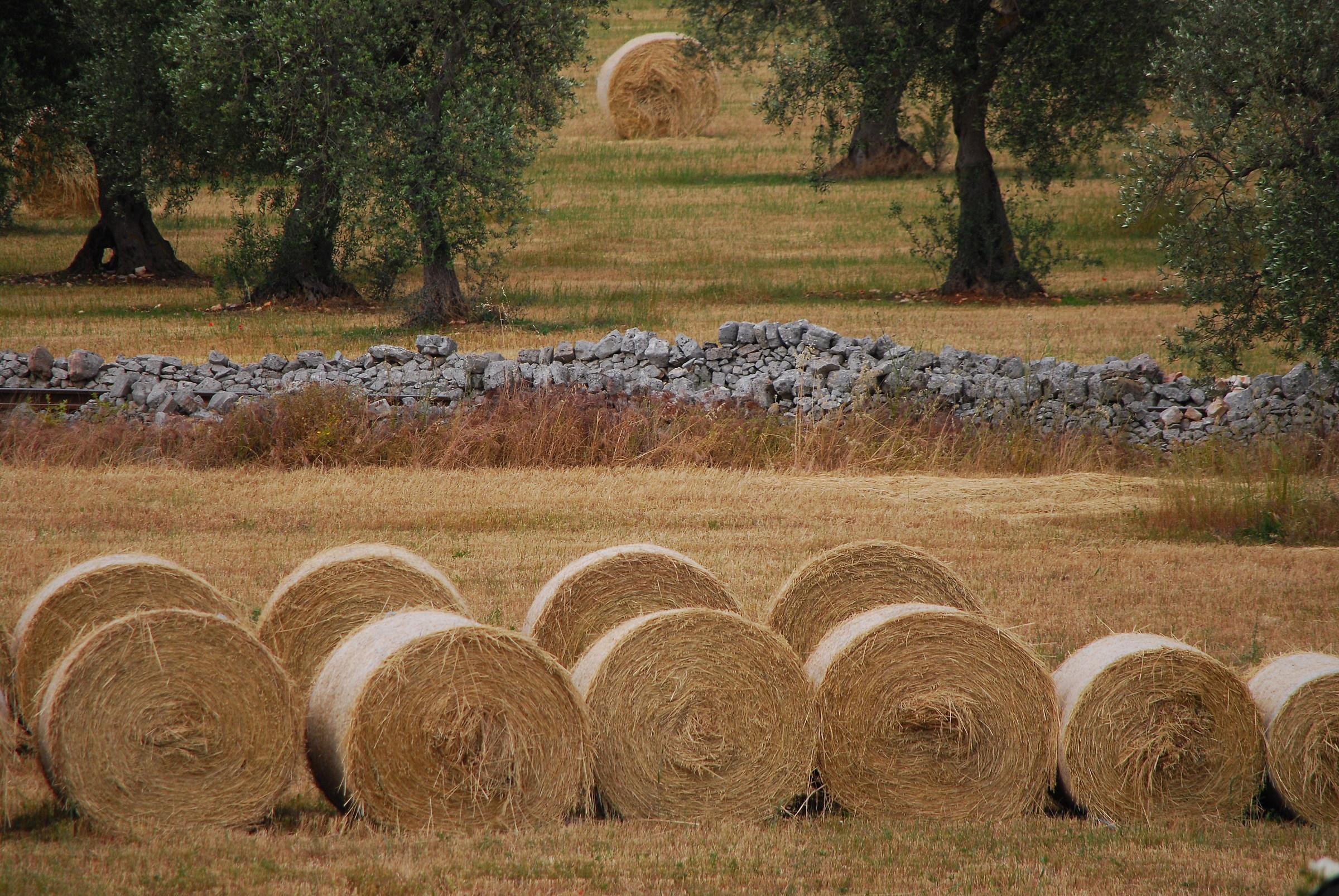Apulian countryside...