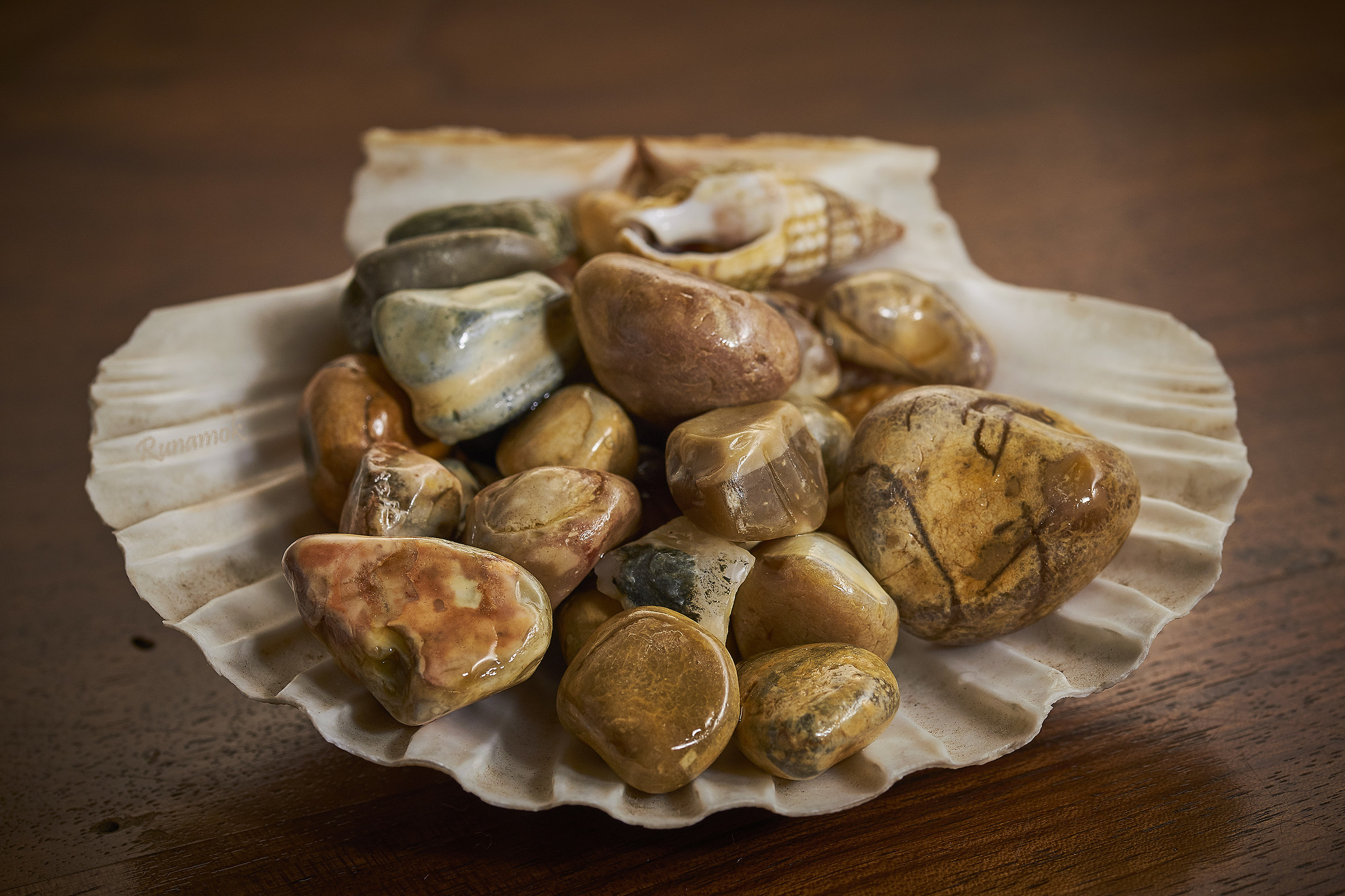 Stones and shells...